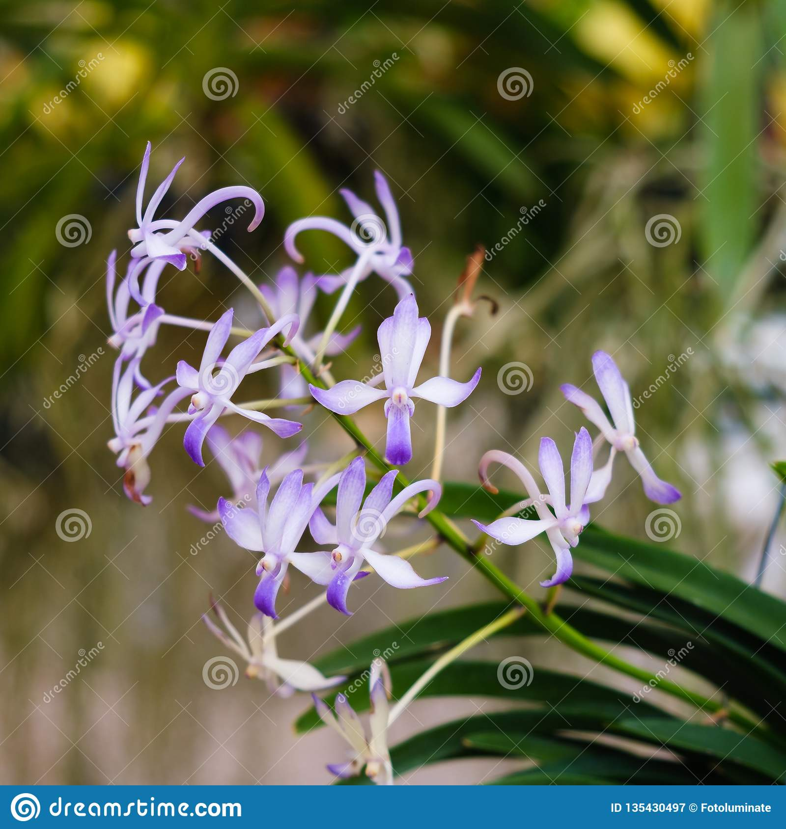 Exotic Orchids Stock Image Image Of Nature Forest 135430497