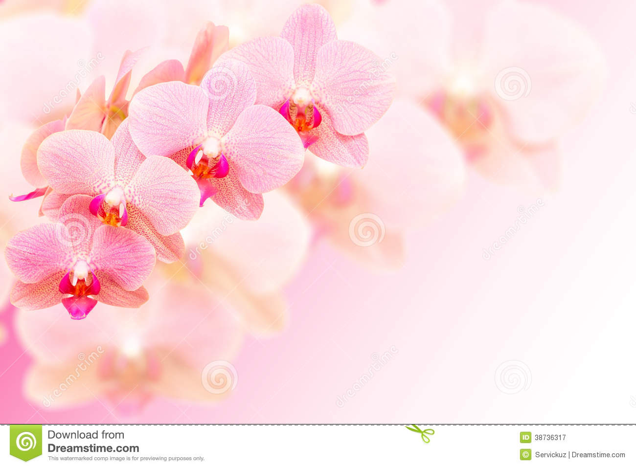 orchid plumeria wallpapers