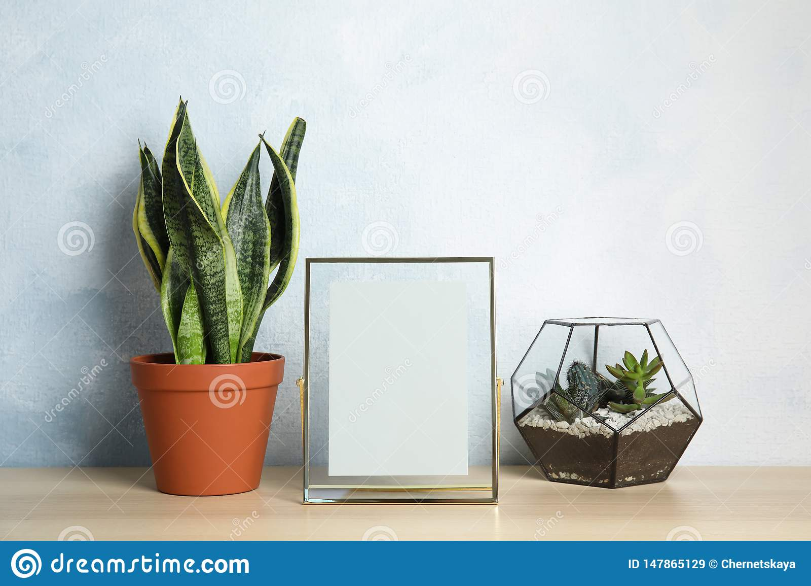 Exotic plants and photo frame on table near color wall. Home decor