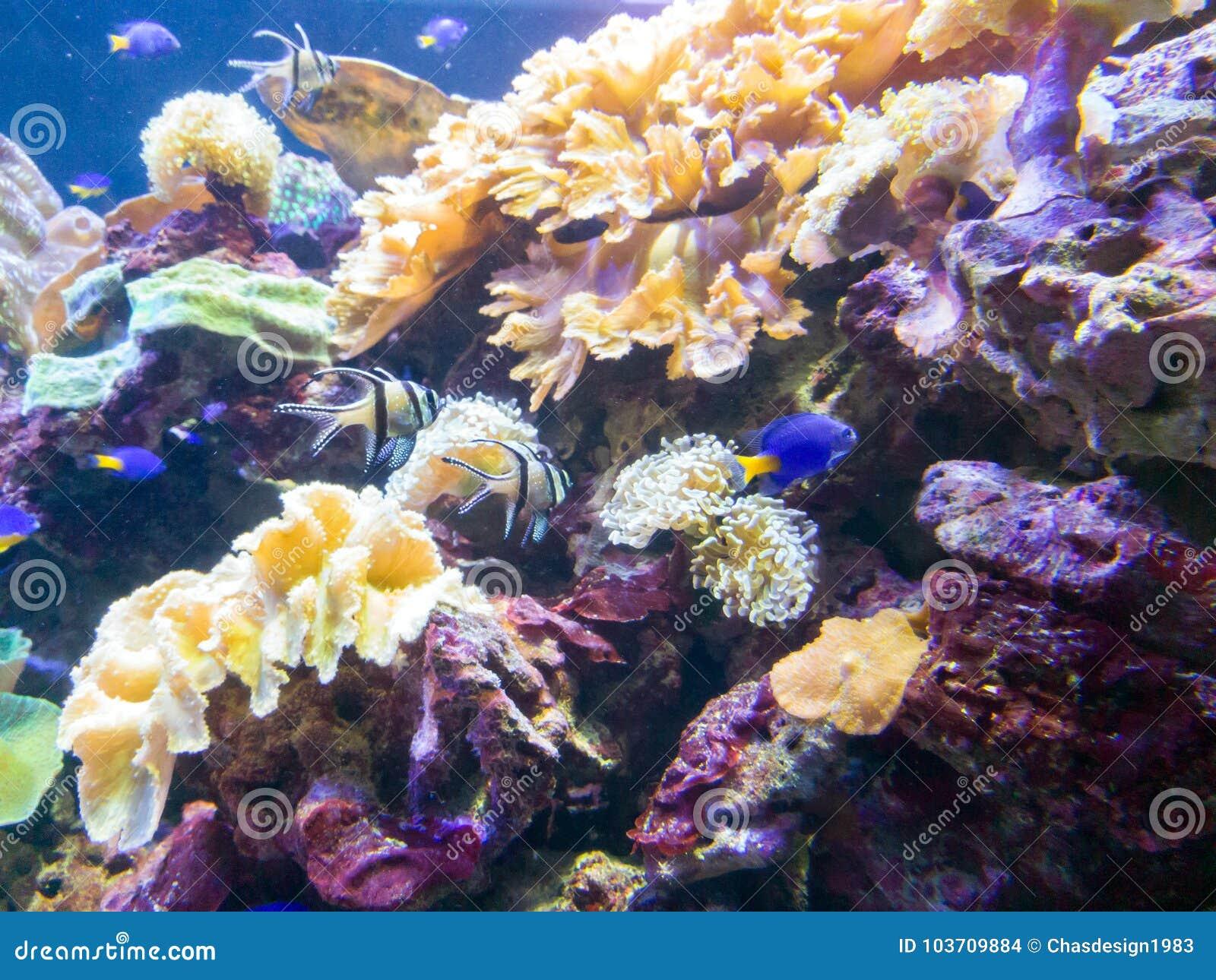 Exotic Saltwater Fish Swimming In A Big Aquarium Stock Photo - Image