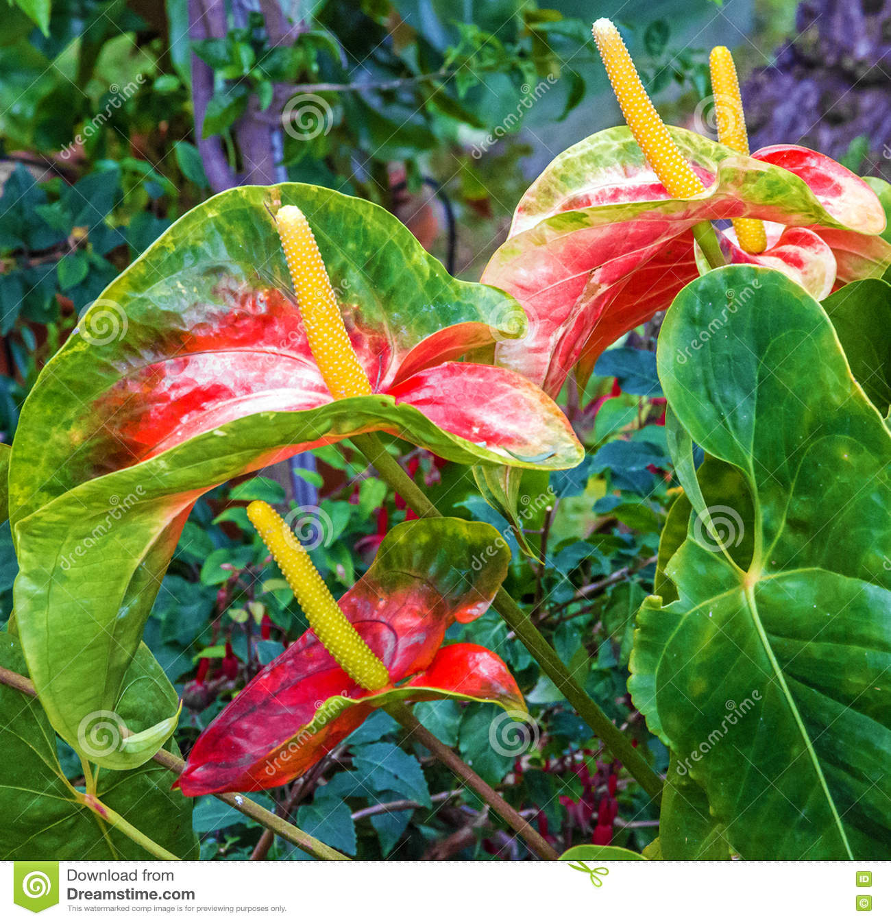 Exotic Tropical Flowers In Madeira Portugal Stock Photo Image Of