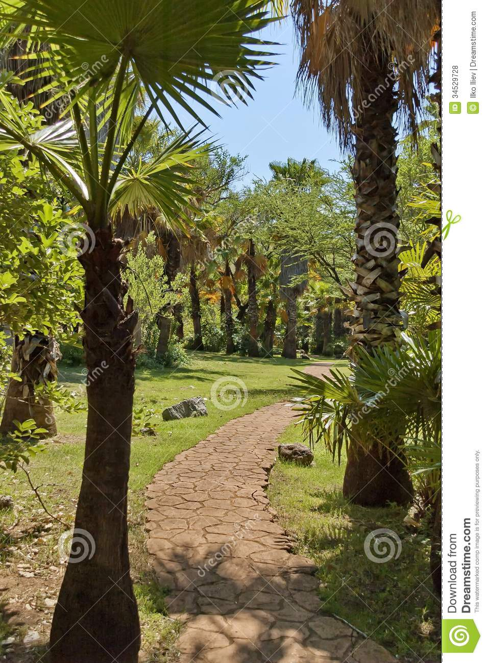 exotic tropical garden with palm in sun city royalty free stock photos image 34529728