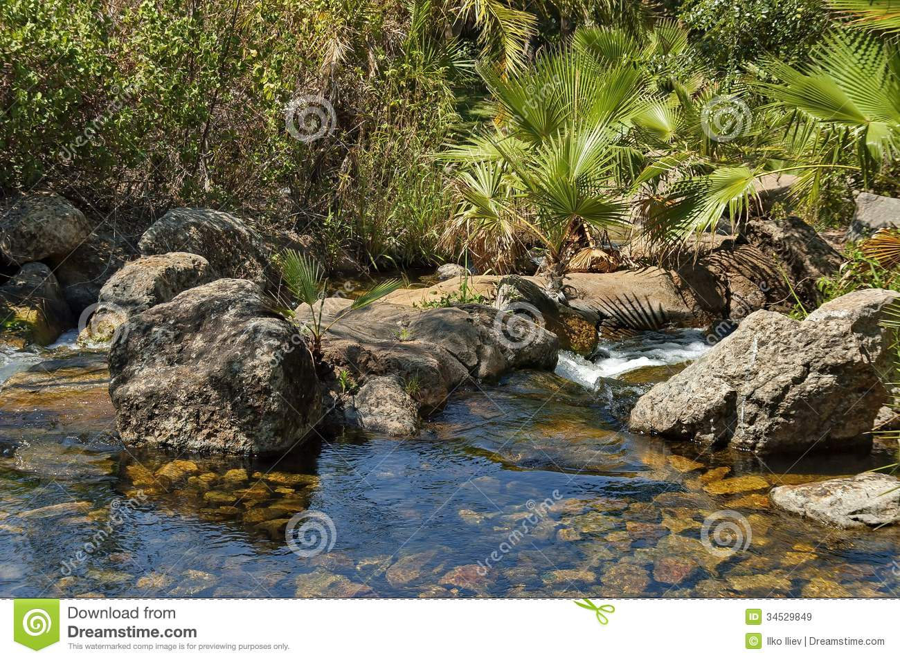 Exotic Tropical Garden With Palm In Sun City Stock Image - Image of ...