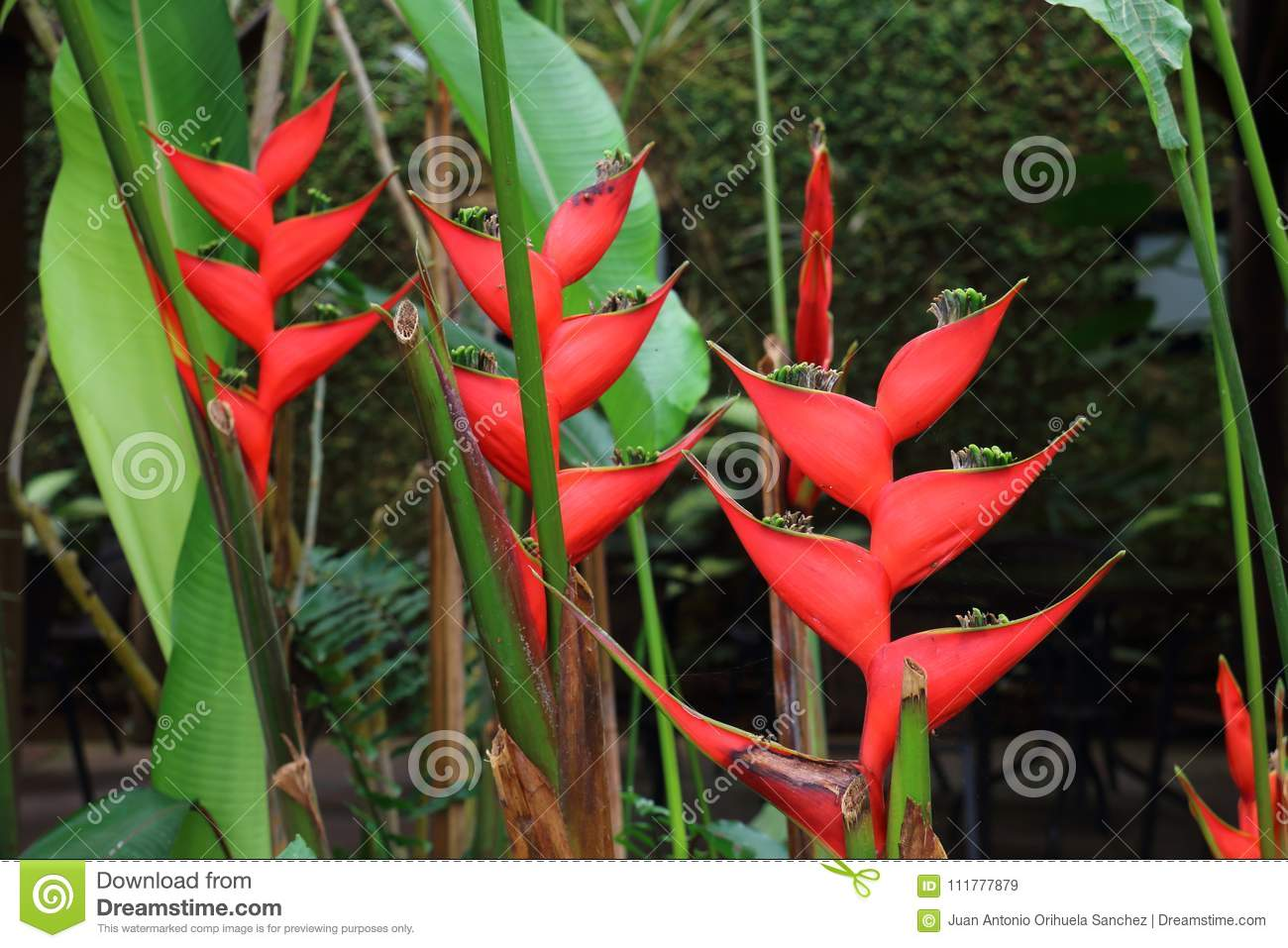 Exotic tropical vegetation