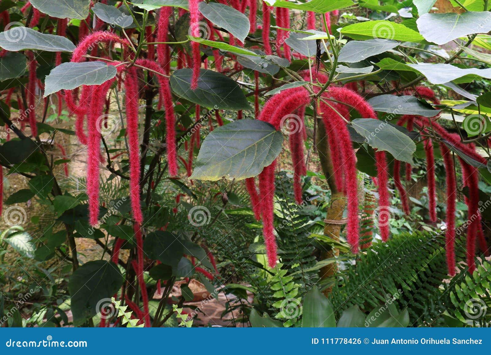 Exotic tropical vegetation