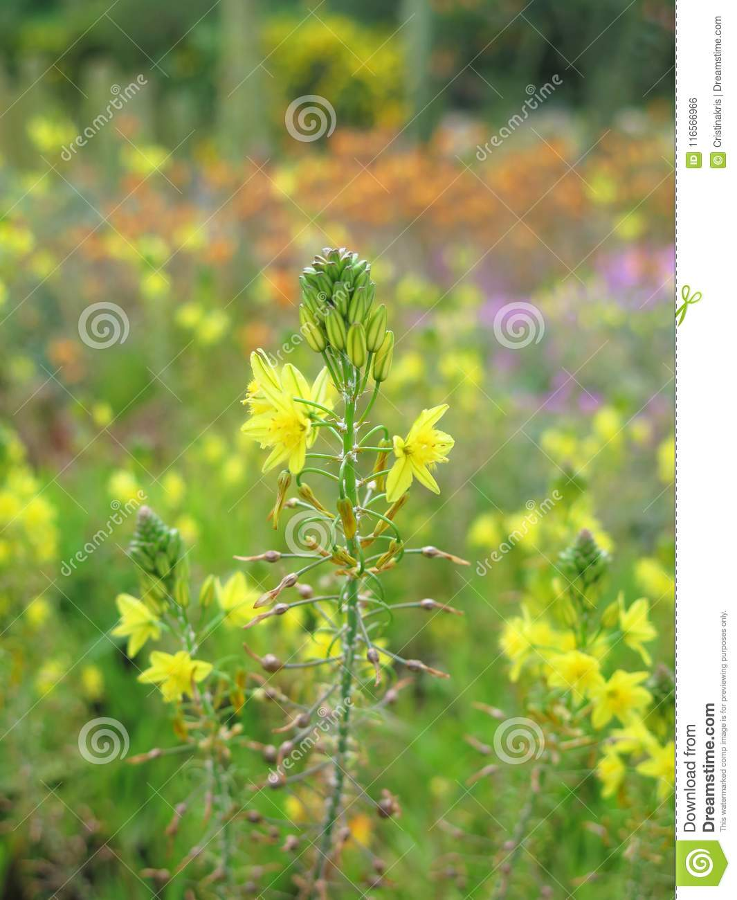 Exotic Yellow Flowers Stock Photo Image Of Broken Branches 116566966