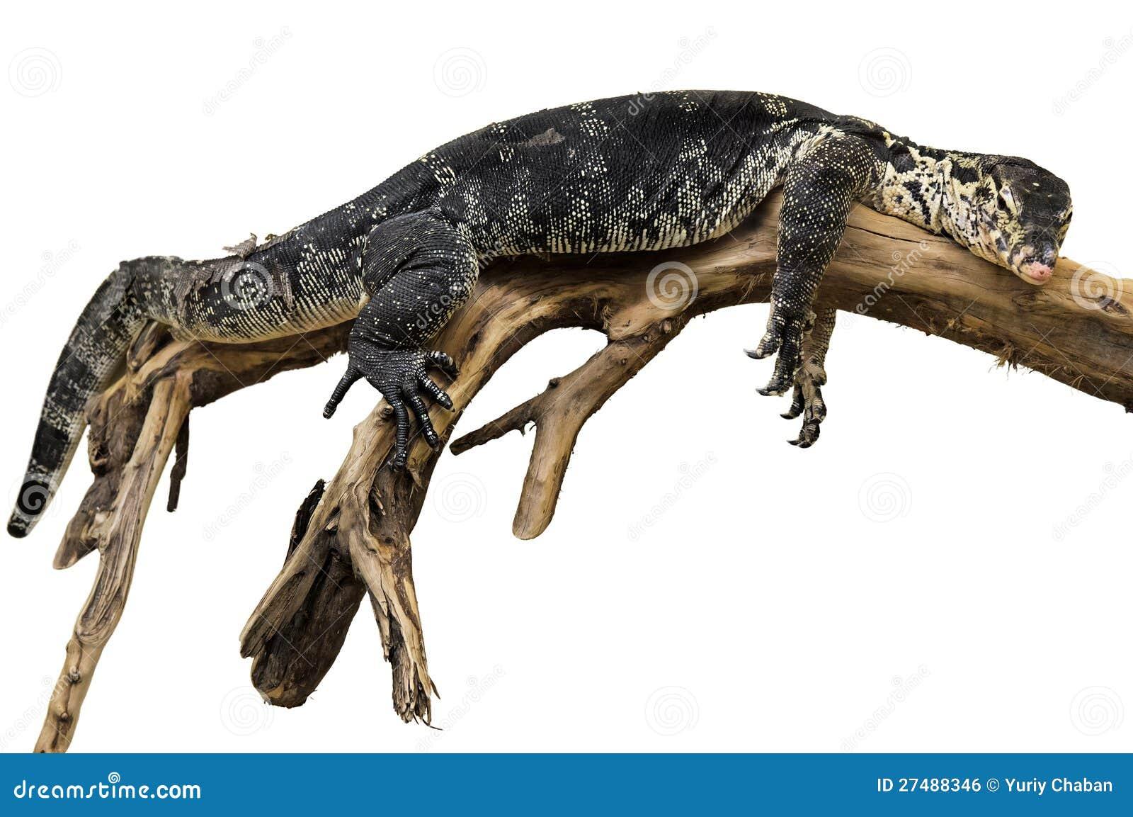 Exotisch reptiel op de tak