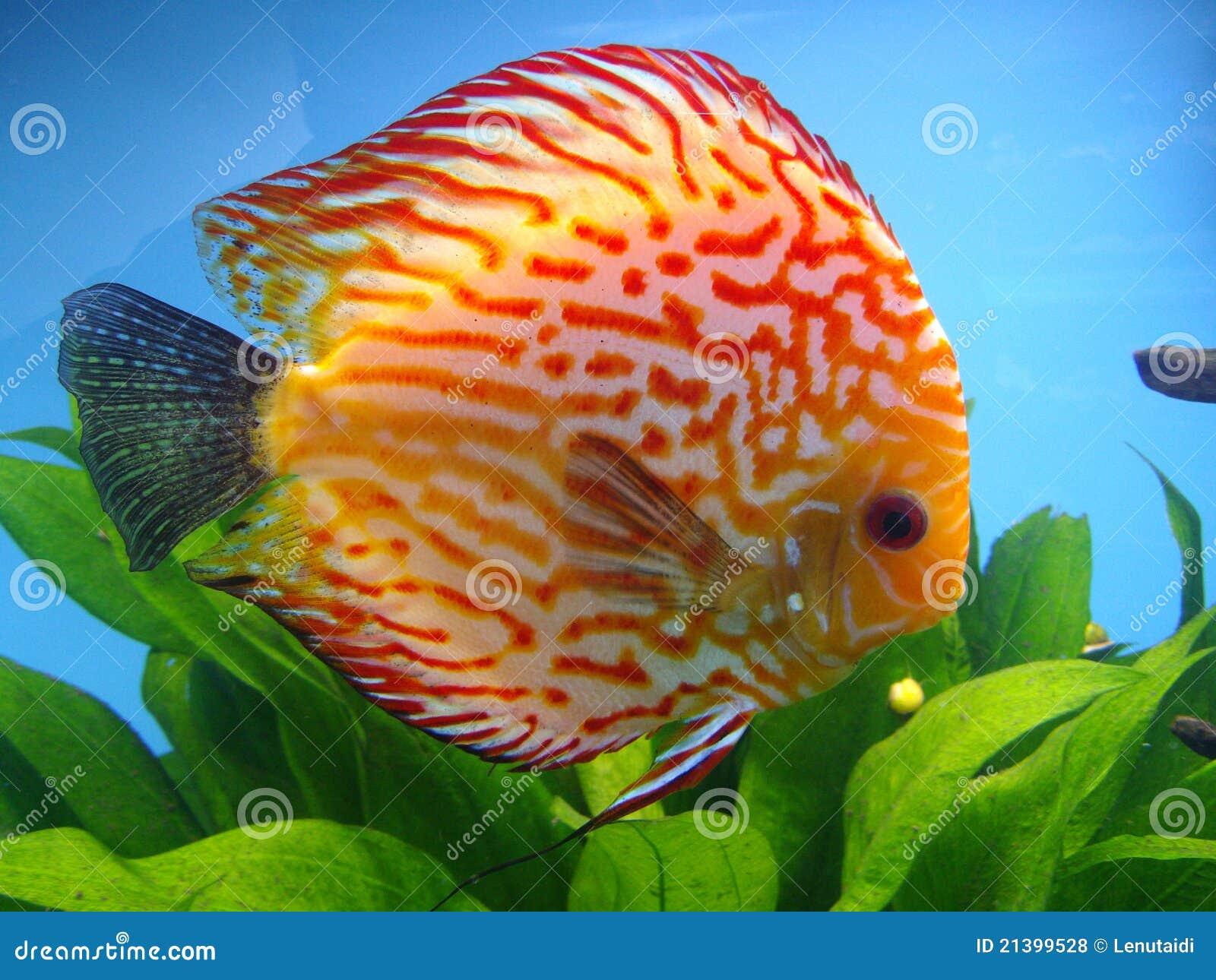 Exotische fische stockfoto bild von fische glas tief for Fische aquarium