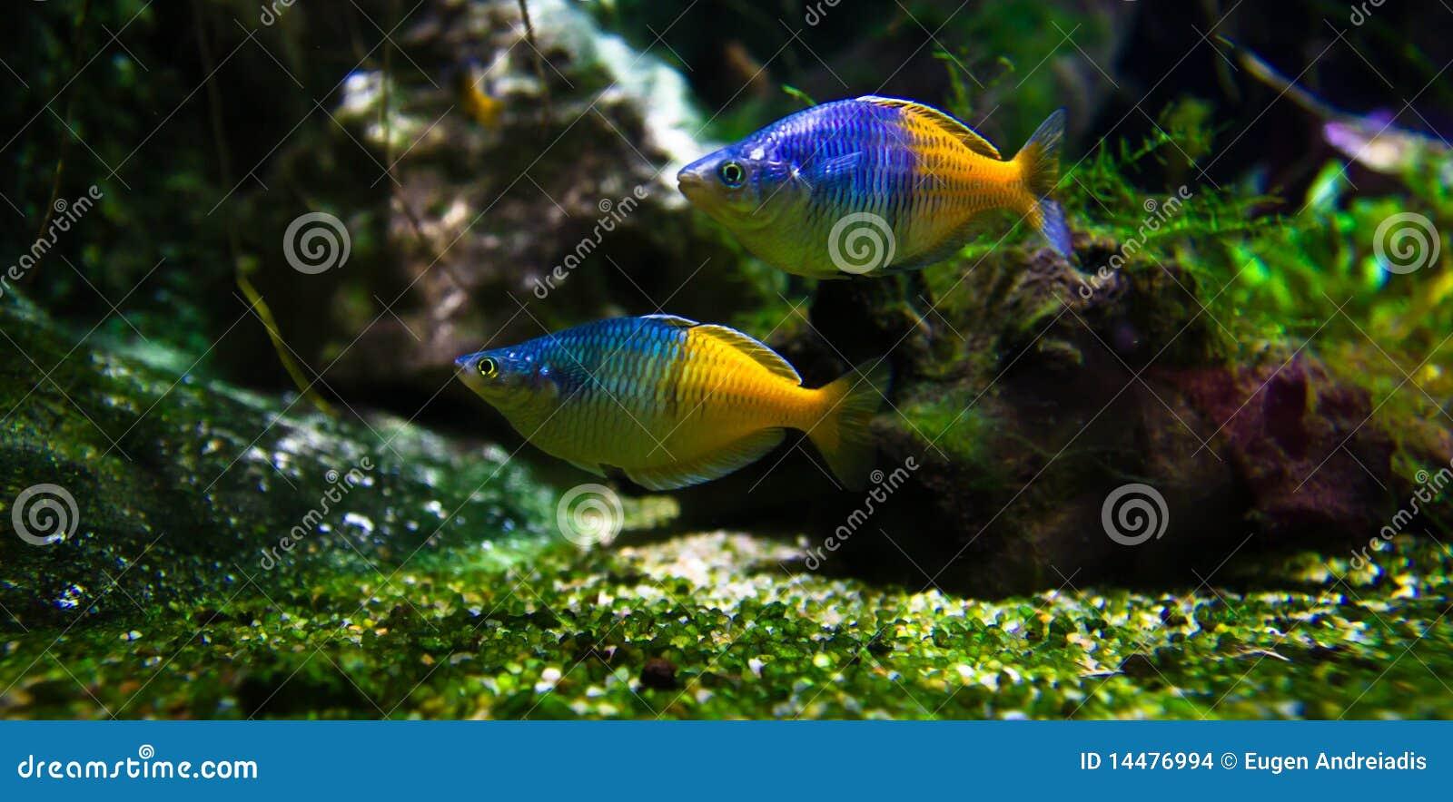 Exotische fische im aquarium stockbilder bild 14476994 for Fische aquarium