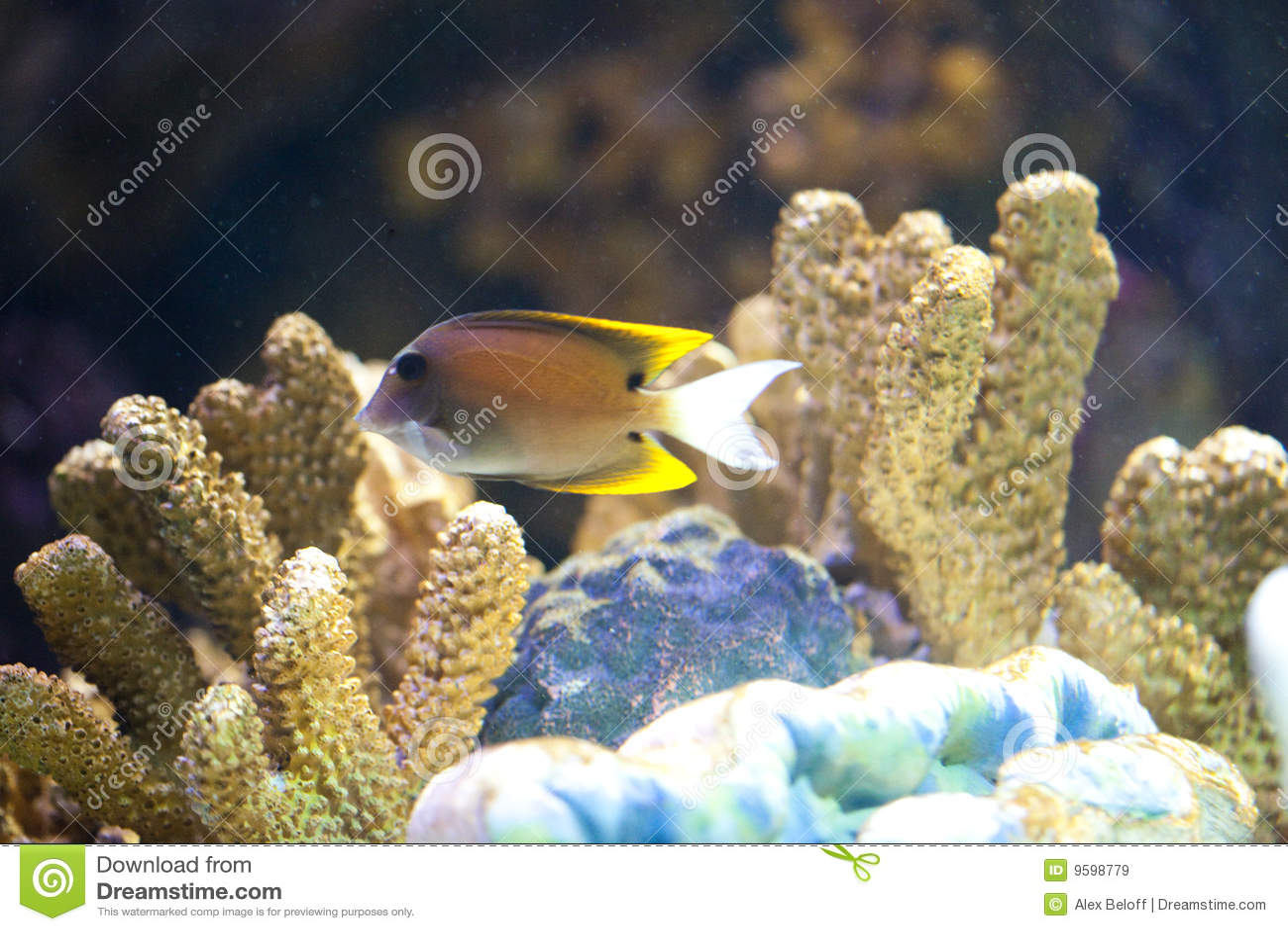 Exotische Fische im Becken