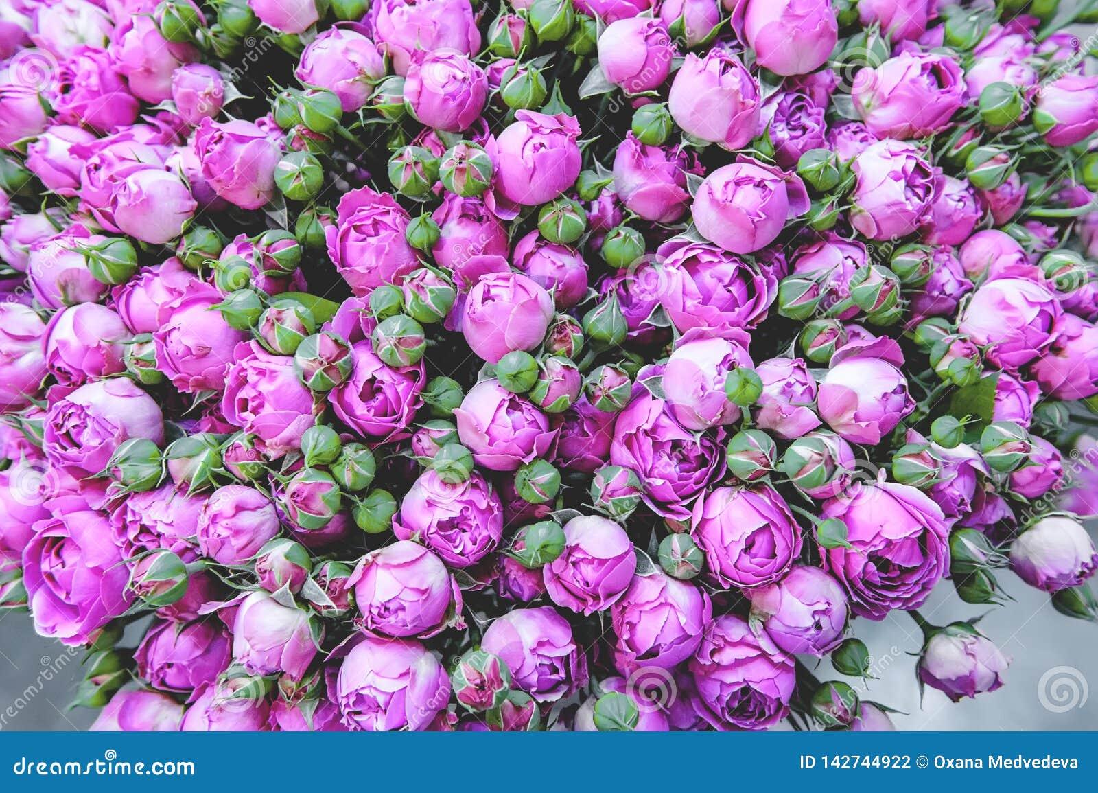 Exotische Rosen von der modernen Vielzahl der lila Auslese im Blumenstrau? als Geschenk Hintergrund Selektiver Fokus