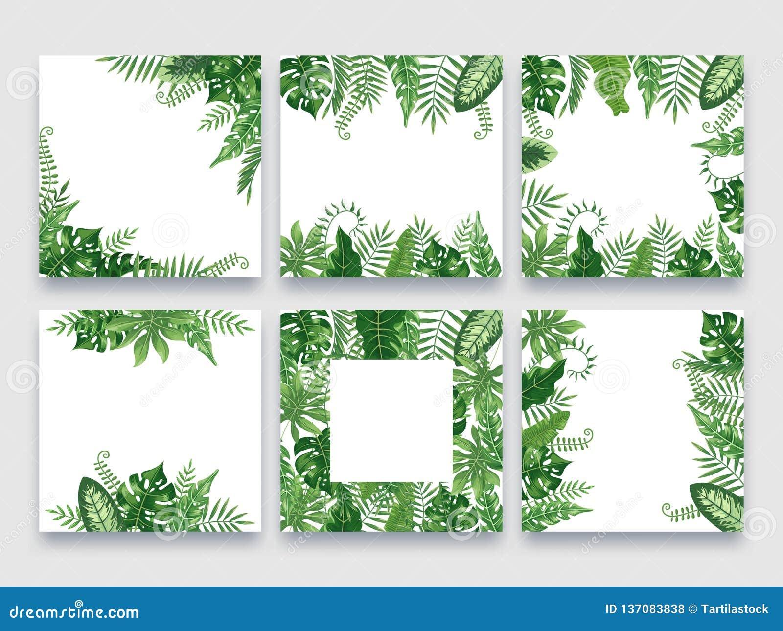 Exotischer Blattrahmen Tropische Blattgrenze, Natursommerrahmen und Luxuspalmblattgrenzvektorentwurfshintergrund