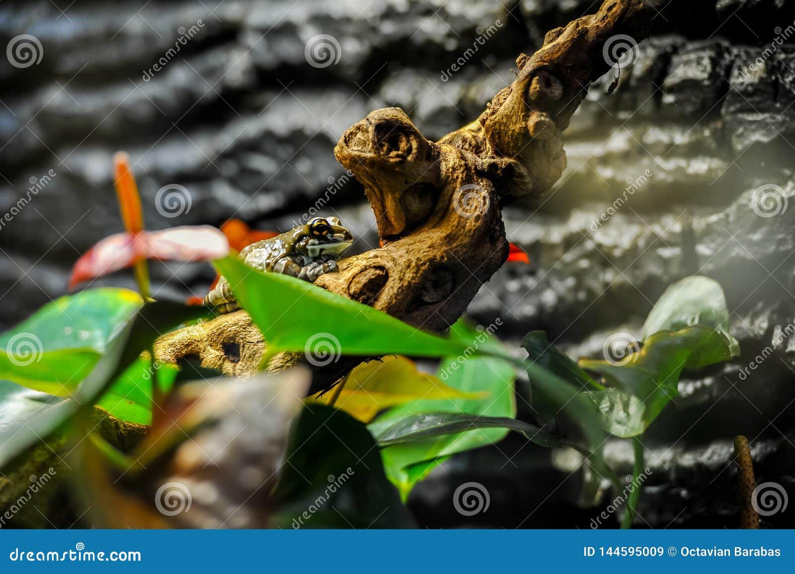 Exotischer Frosch auf Baumast mit grünen Blättern und Blumen