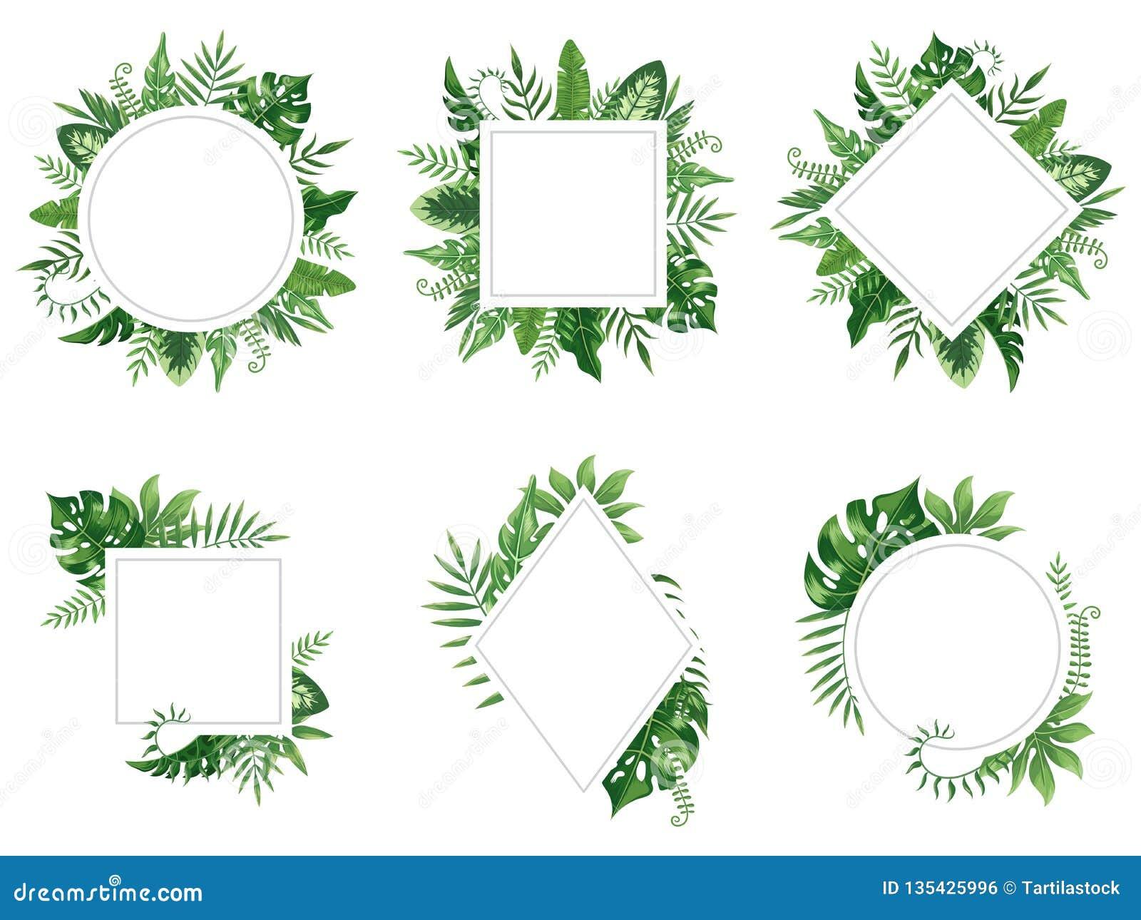 Exotisk bladram Våren lämnar kortet, tropiska trädramar och uppsättningen för vektor för djungel för tappning den blom- gränsen i