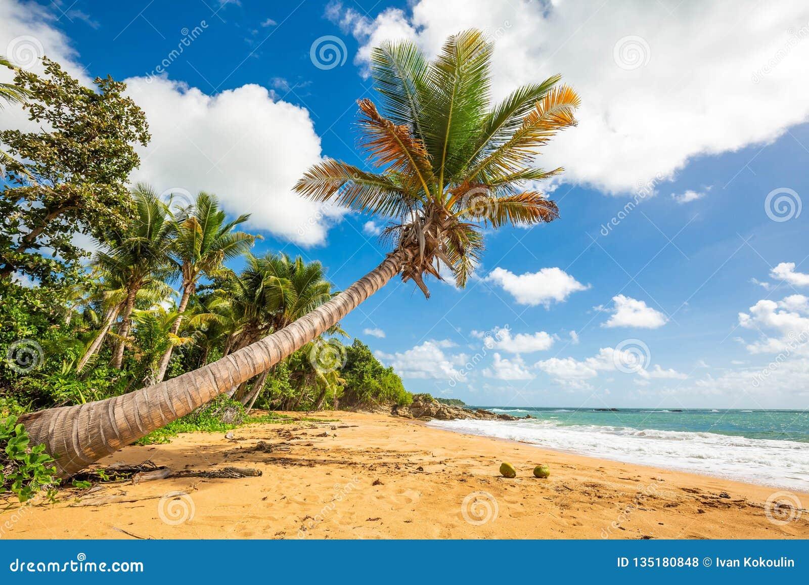 Exotisk carribean kust av den Puerto Rico Flamenco stranden