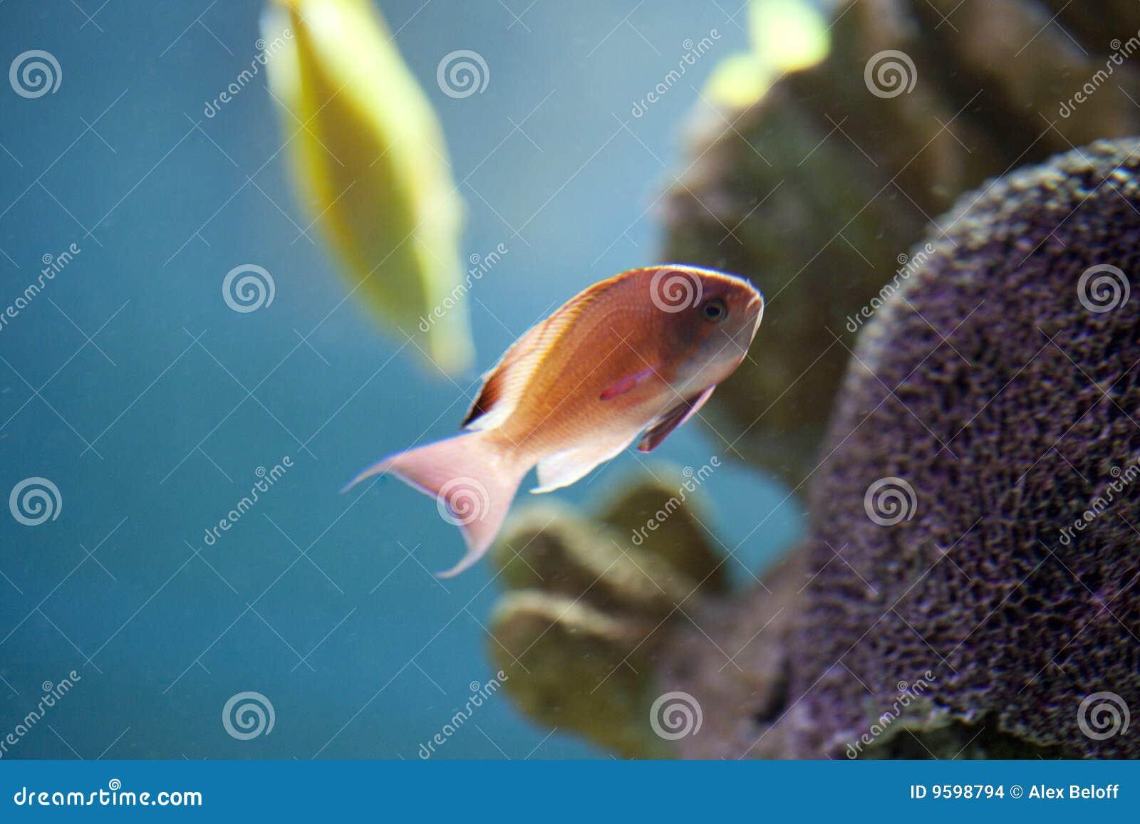 Exotisk fiskbehållare