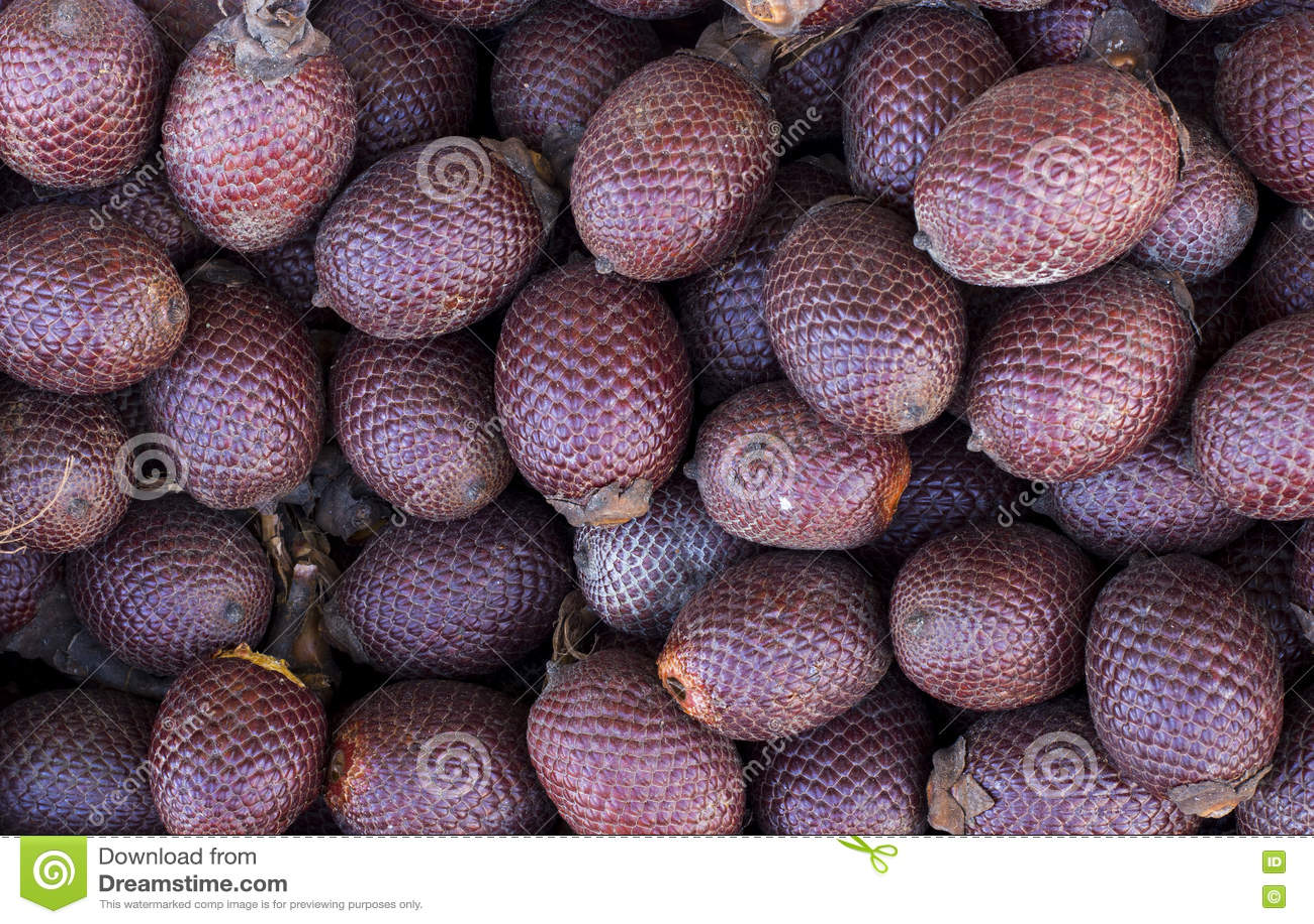 Exotisk frukt av Amerika: Aguaje eller Moriche, gömma i handflatan frukt, buritimuttrar, mauritiaflexuosaen, Maurity gömma i hand