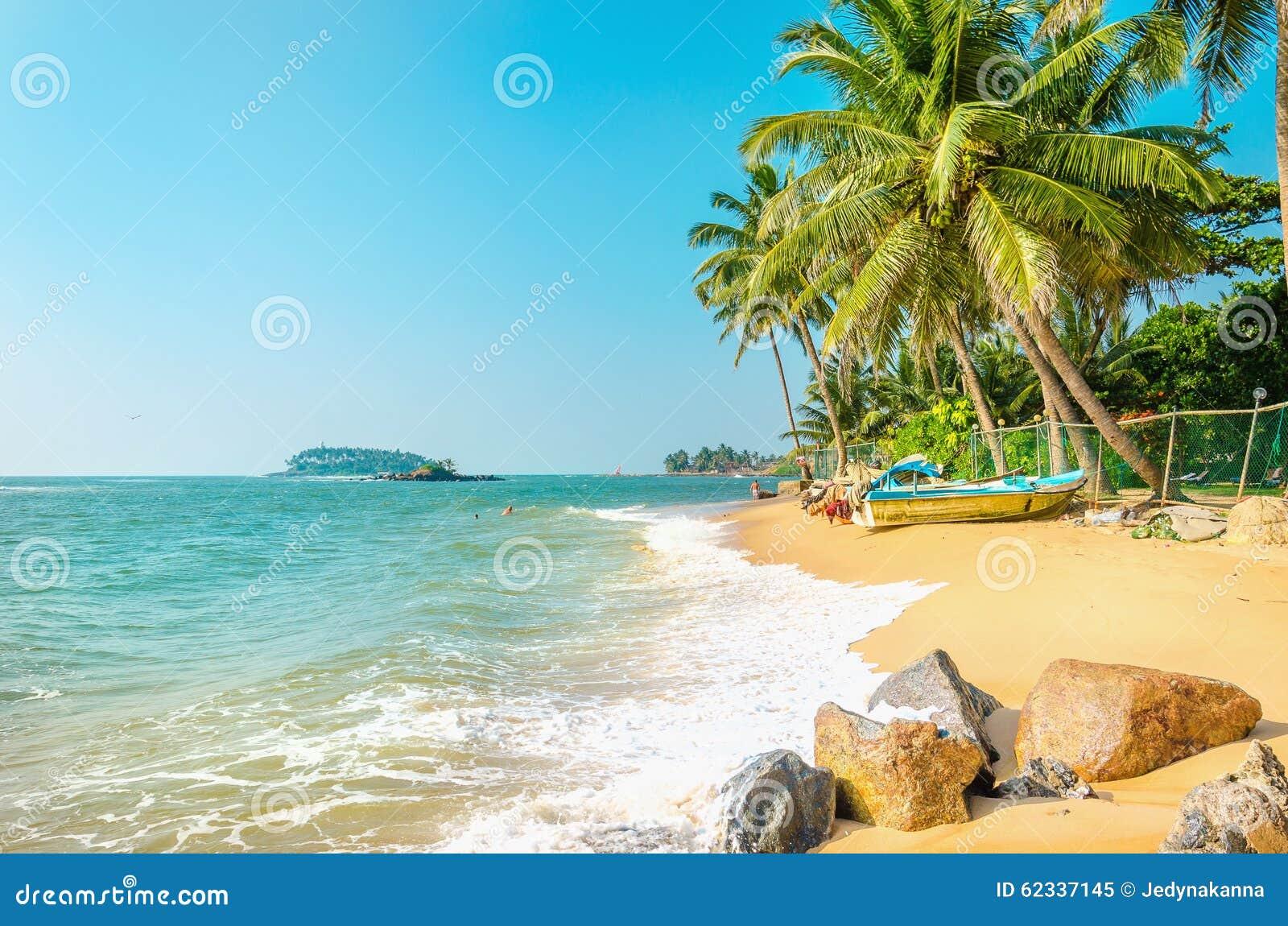 Exotisk strand mycket av palmträd och blå himmel