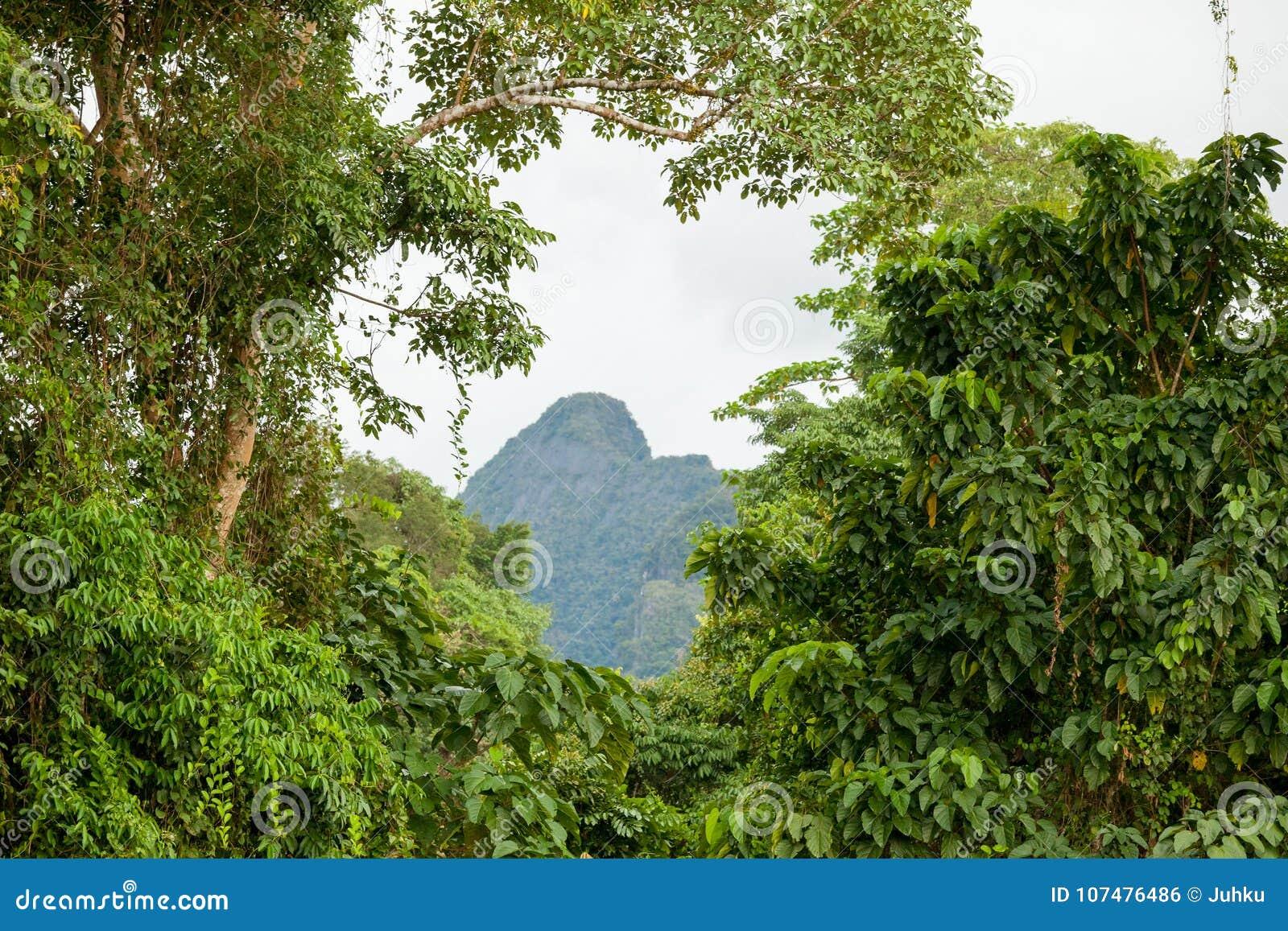 Exotiskt rainforestlandskap