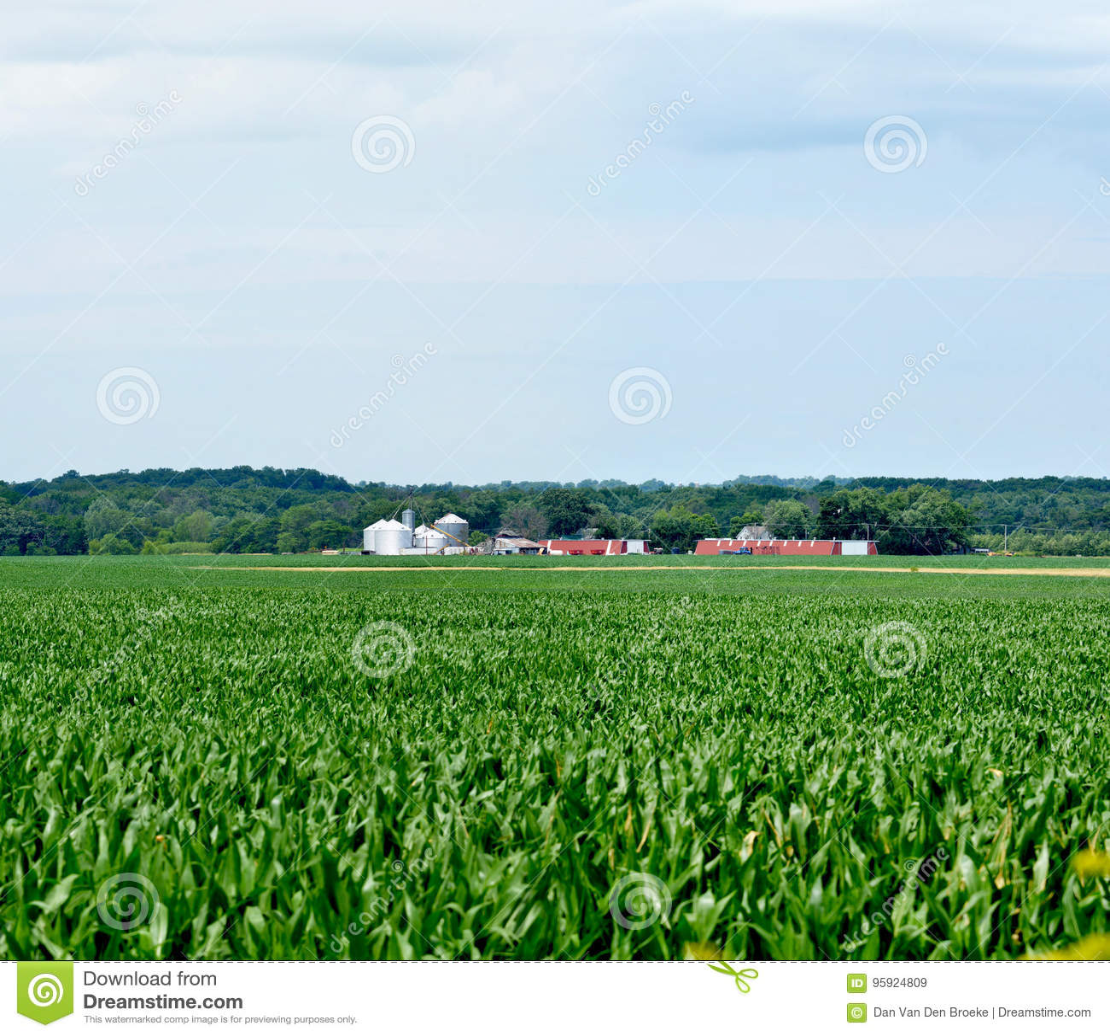 Expansivt Midwest havrefält