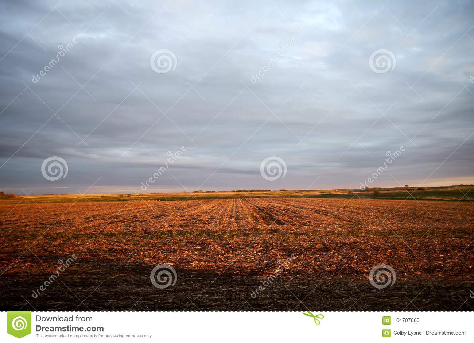 Expansivt rött fält under gråa mulna himlar