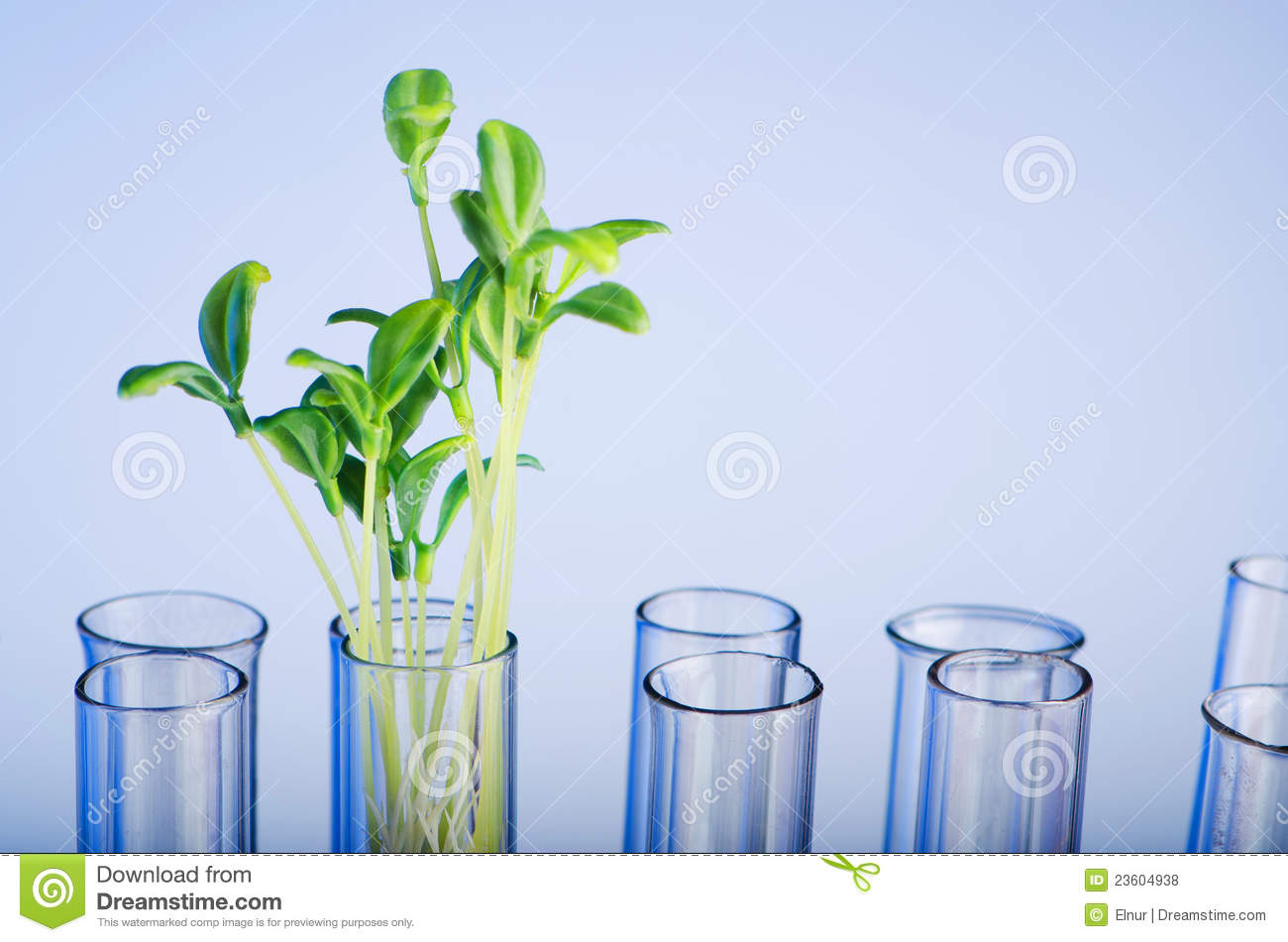 Experiment with green seedling
