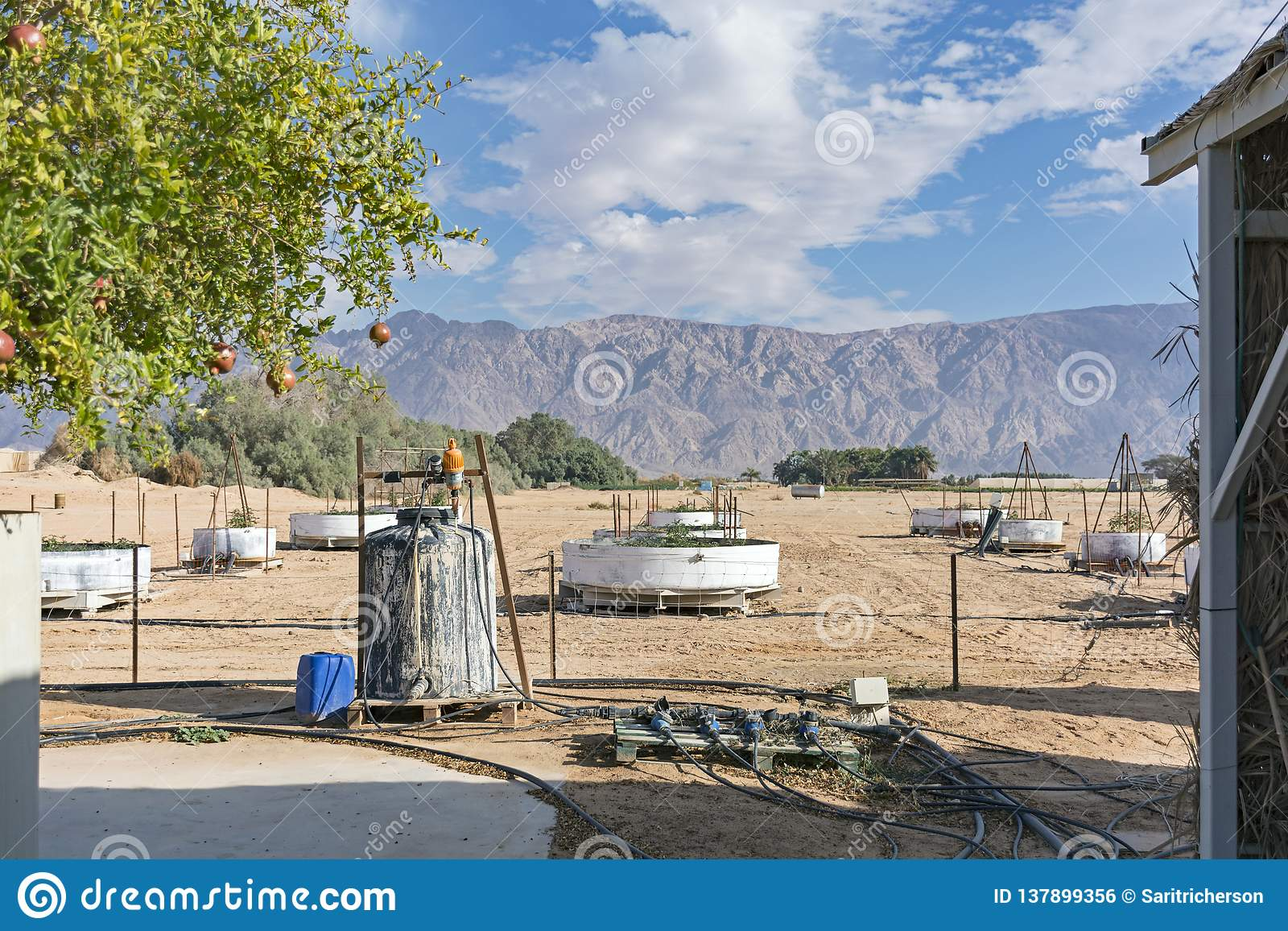 Experimenteel Landbouwlandbouwbedrijf in de Arava-Woestijn