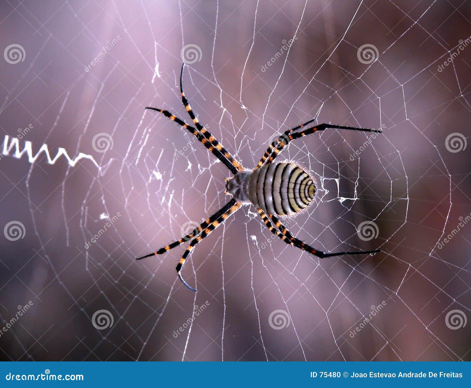 Explo Web
