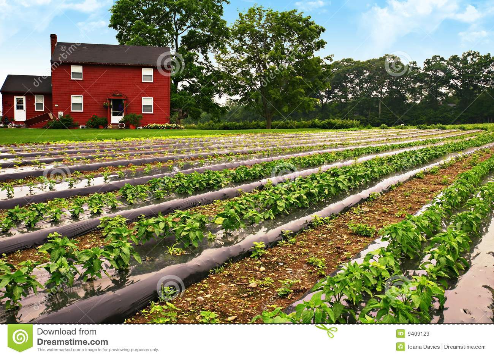Exploração agrícola da pimenta