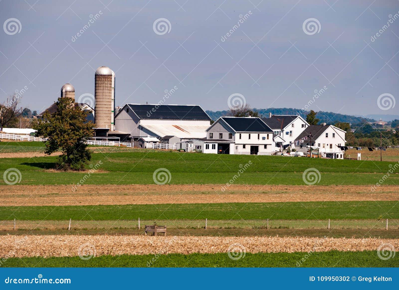 Exploração agrícola de Amish em Sunny Cloudless Day
