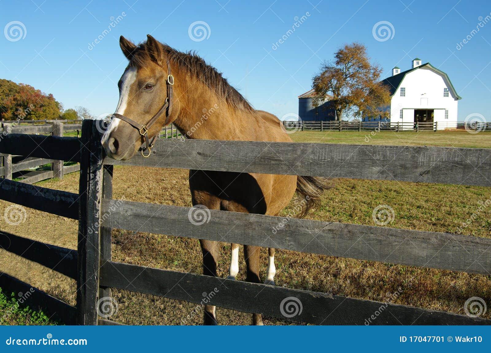 Exploração agrícola do cavalo