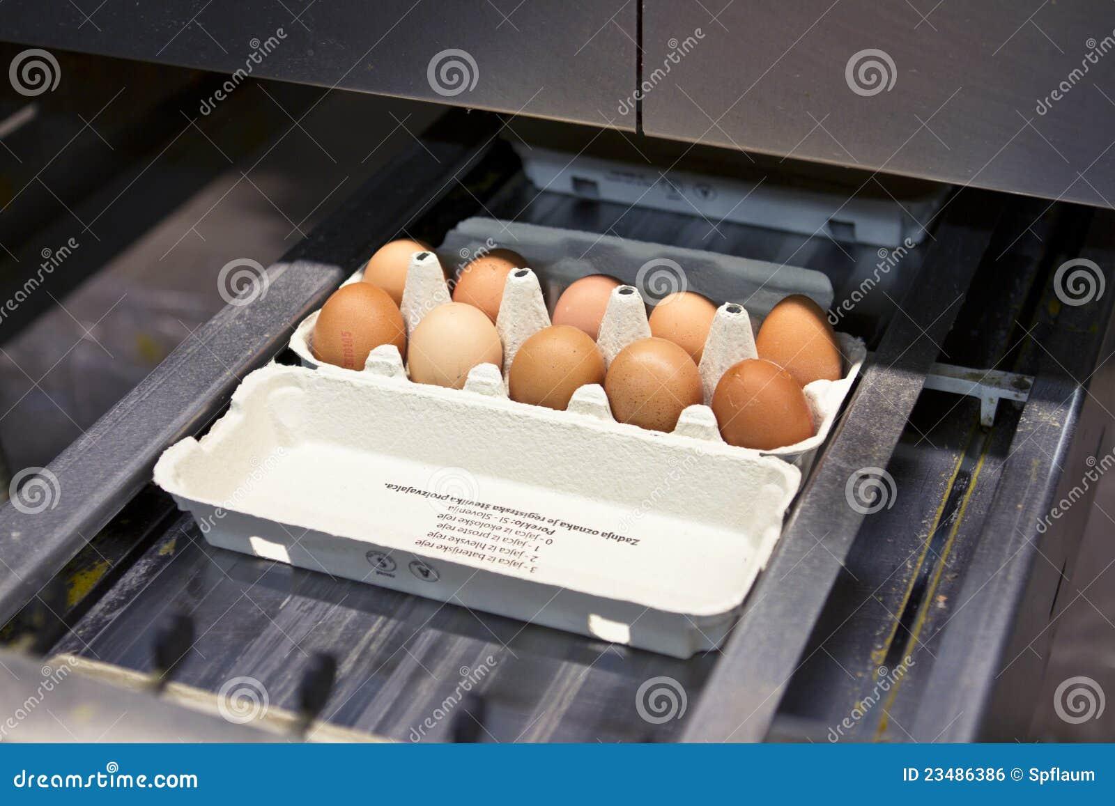 Exploração agrícola do ovo