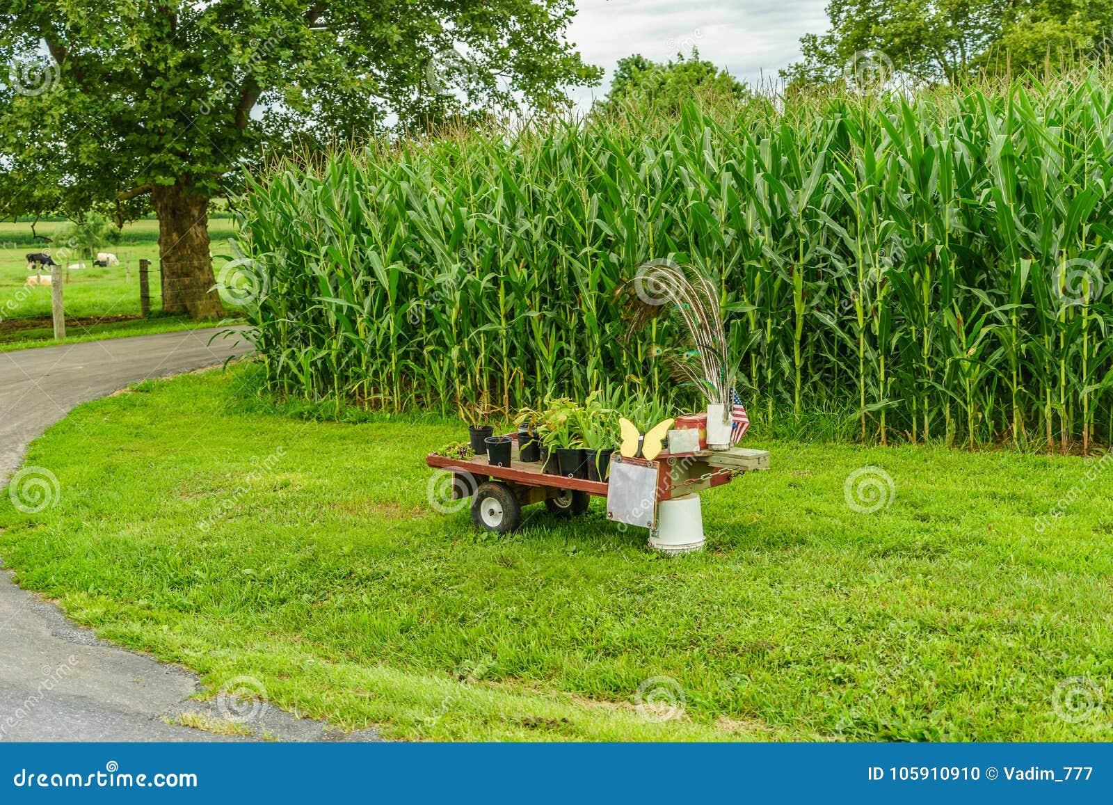 Exploração agrícola do país de Amish, coisa pequena para a venda, agricultura do campo e vacas da pastagem em Lancaster, PA