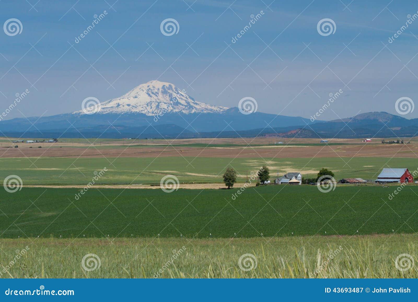 Exploração agrícola do trigo em Washington Valley Agriculture oriental com o Monte Rainier