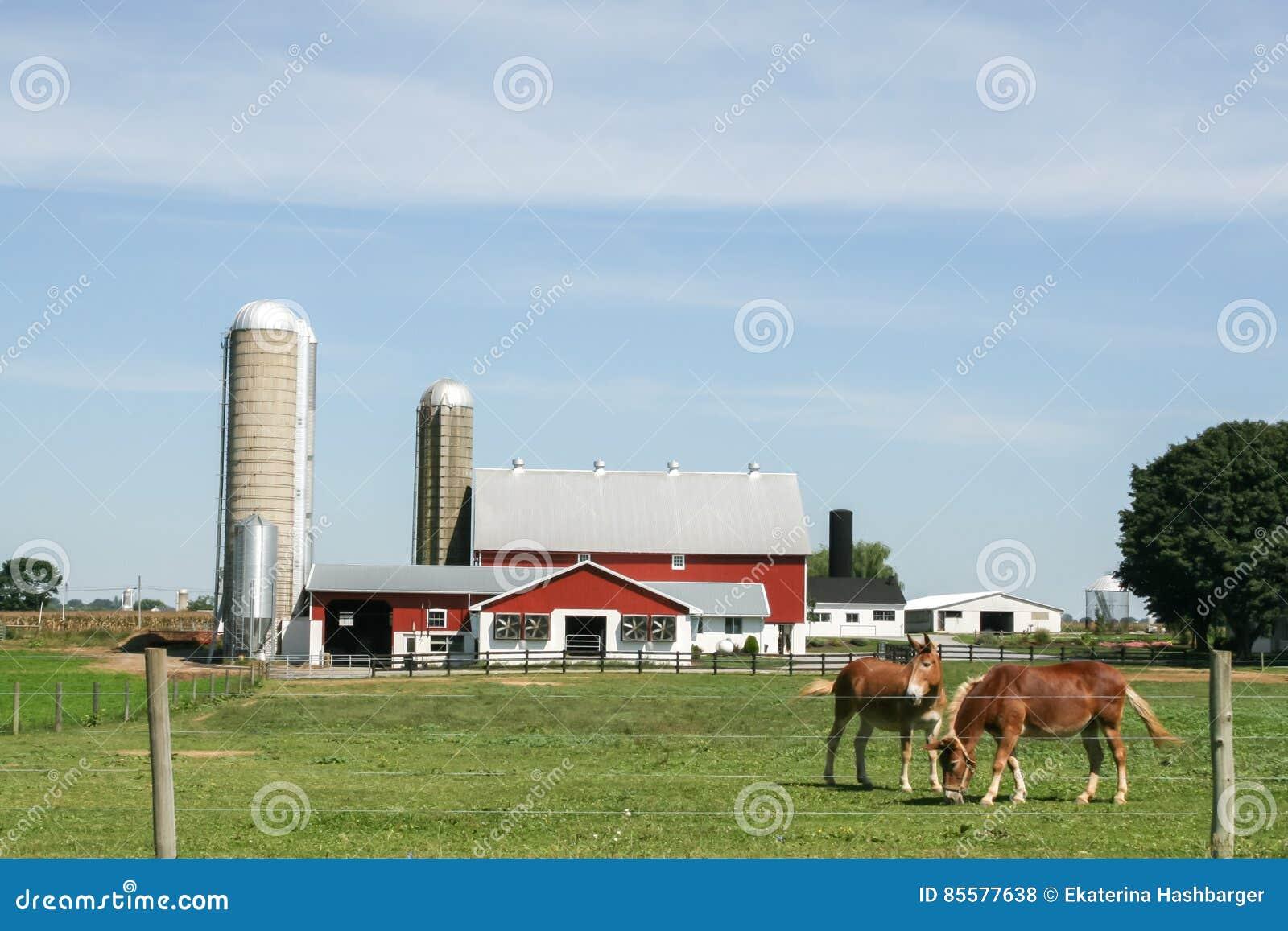 Exploração agrícola e celeiro de Amish em Lancaster, PA