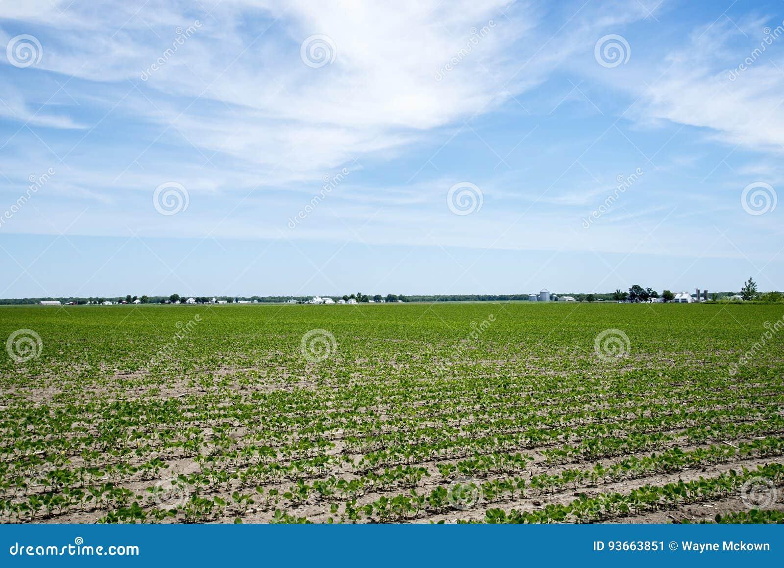 A exploração agrícola e o feijão de soja de Amish colocam, construções, colheita,