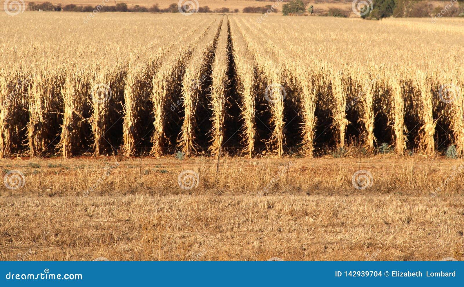 Exploração agrícola em Potchefstroom, África do Sul