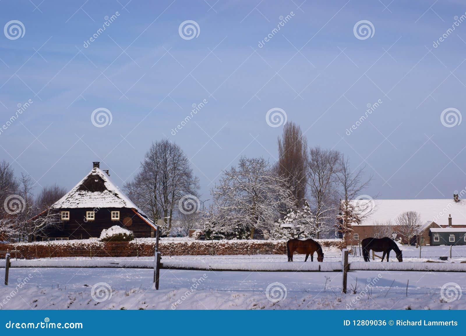 Exploração agrícola holandesa