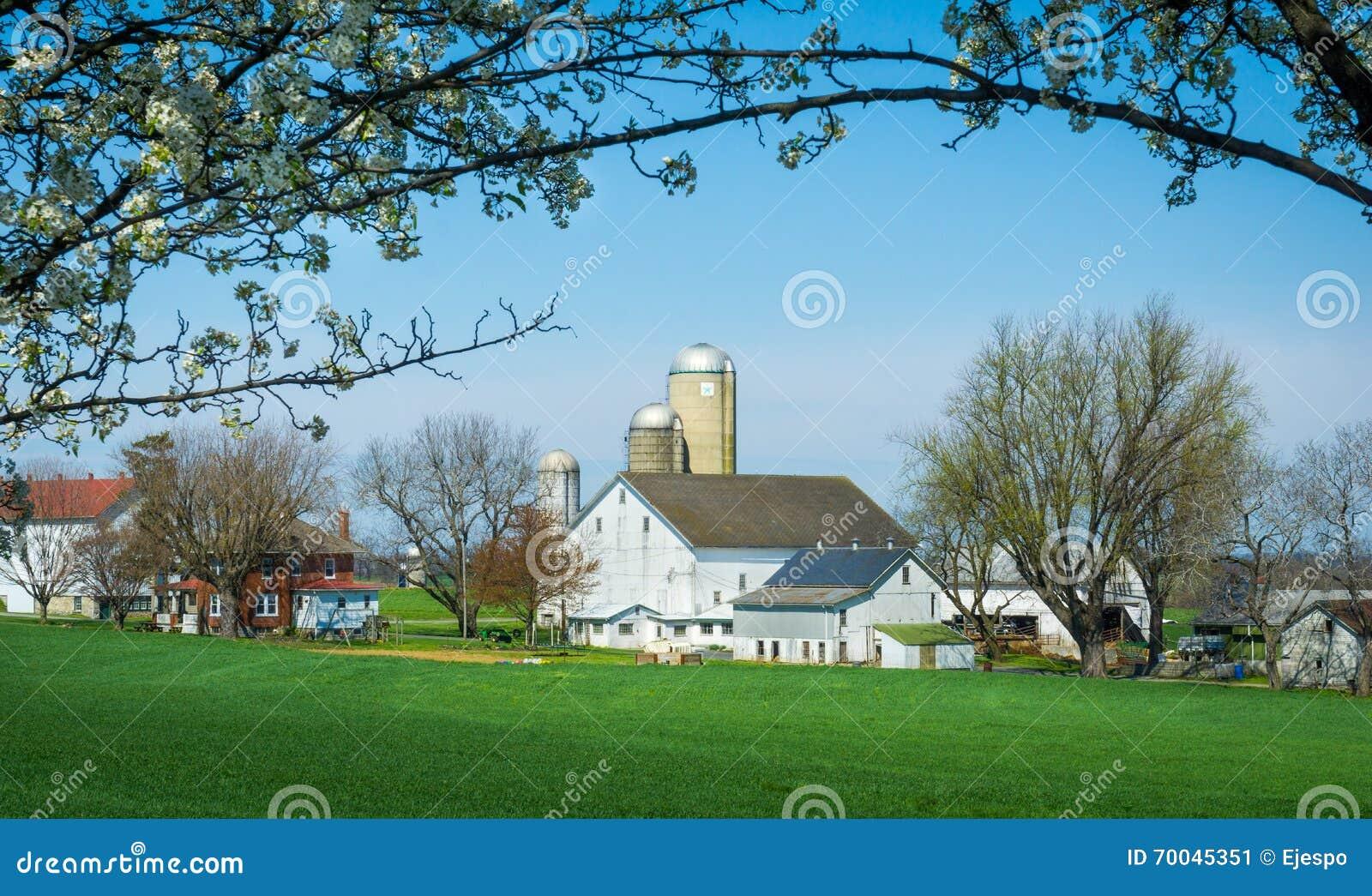 Exploração agrícola quadro de Amish