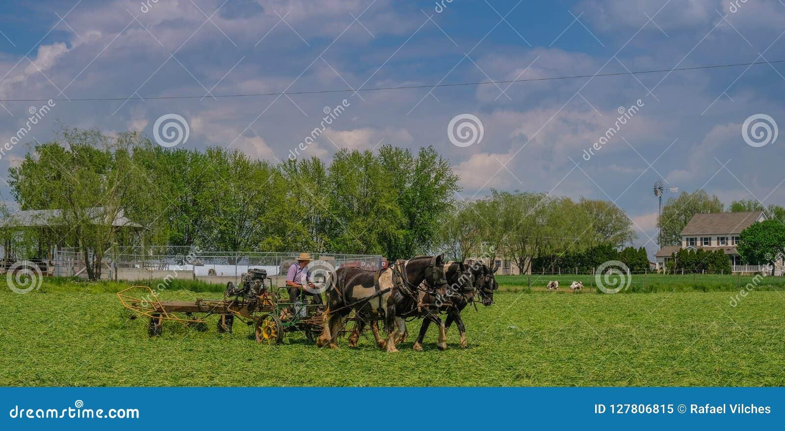 Explorações agrícolas Amish em Pensilvânia