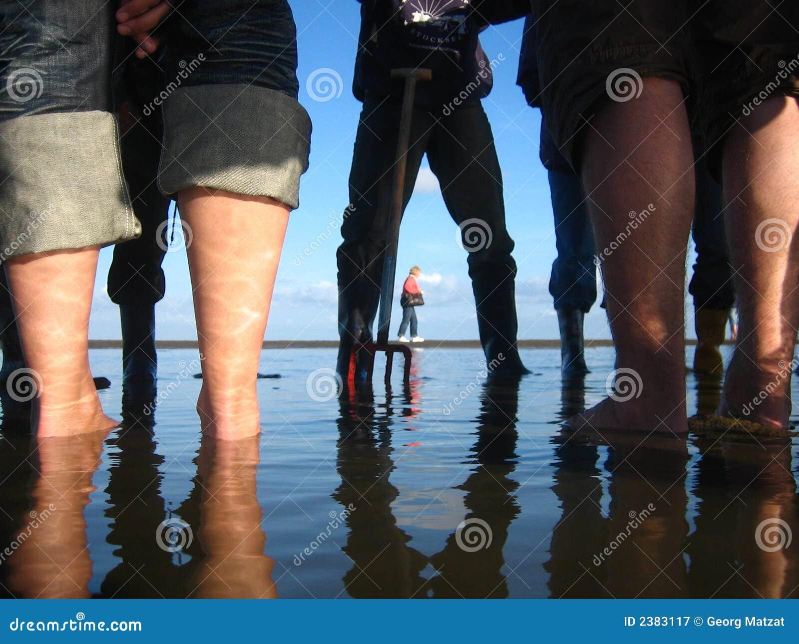 Exploración de los tidelands
