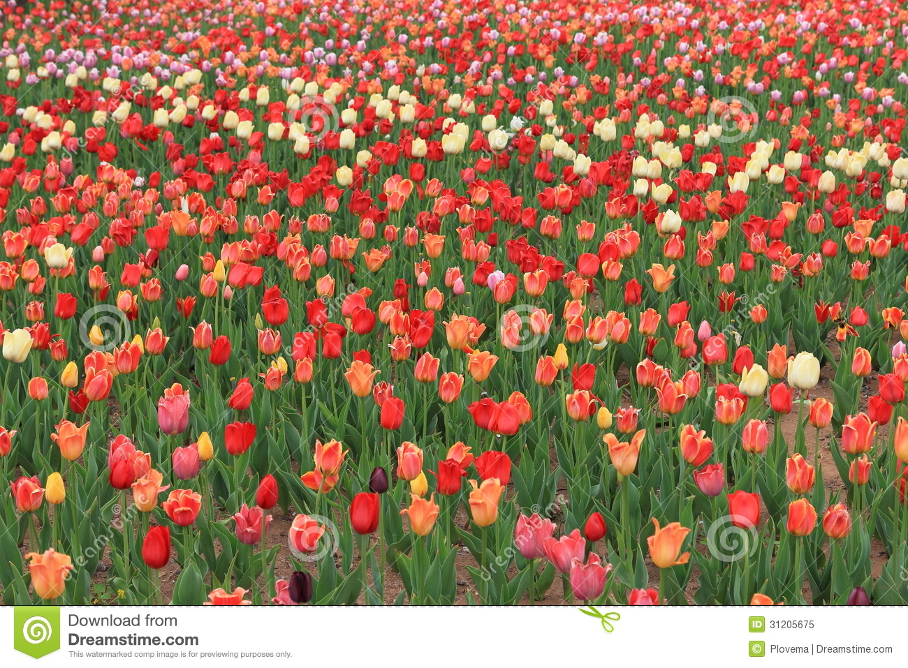 Beautiful flower gardens of the world decorating clear - Expo Flower Garden Stock Photo Image 31205390