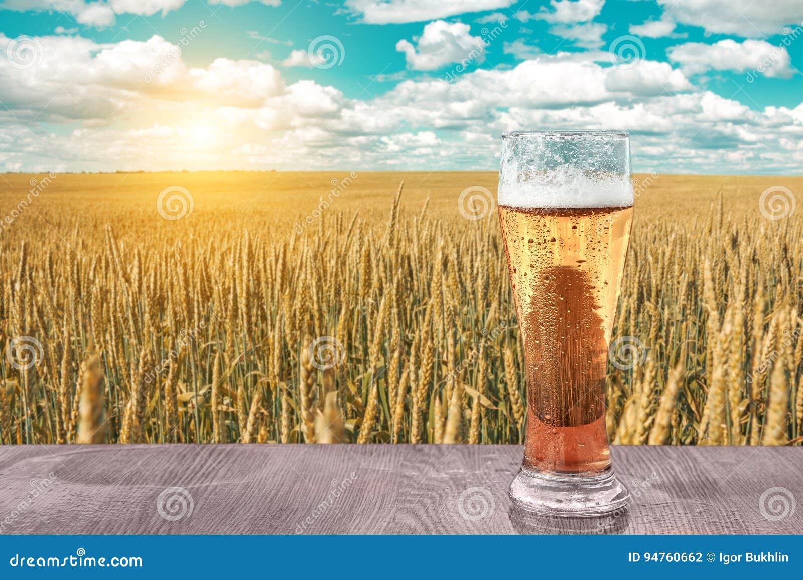 Exponeringsglas av kallt öl på solnedgången på bakgrunden av vetefältet och blå himmel Rekreation och kopplar av Nytt bryggat öl