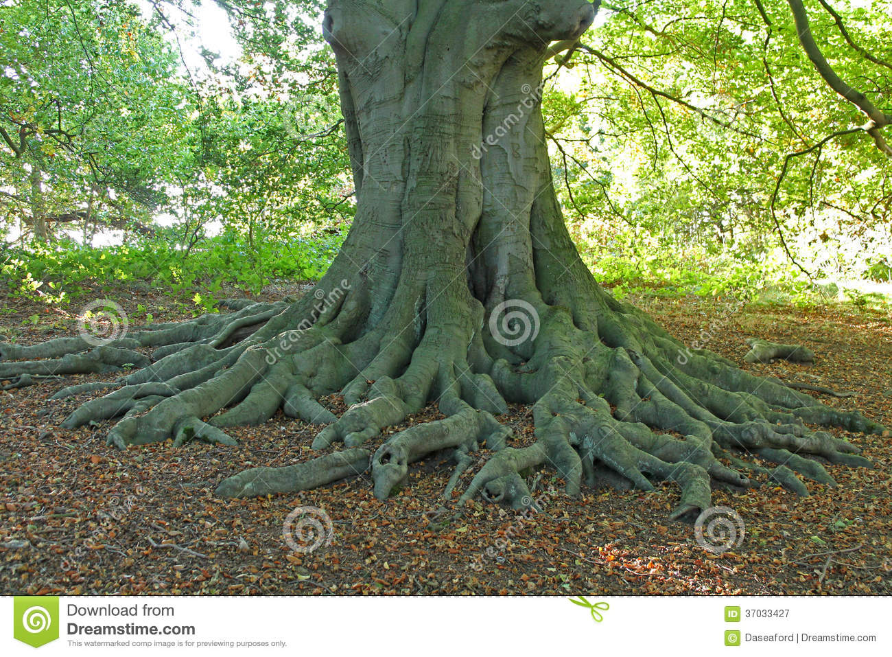 Exposed Roots.