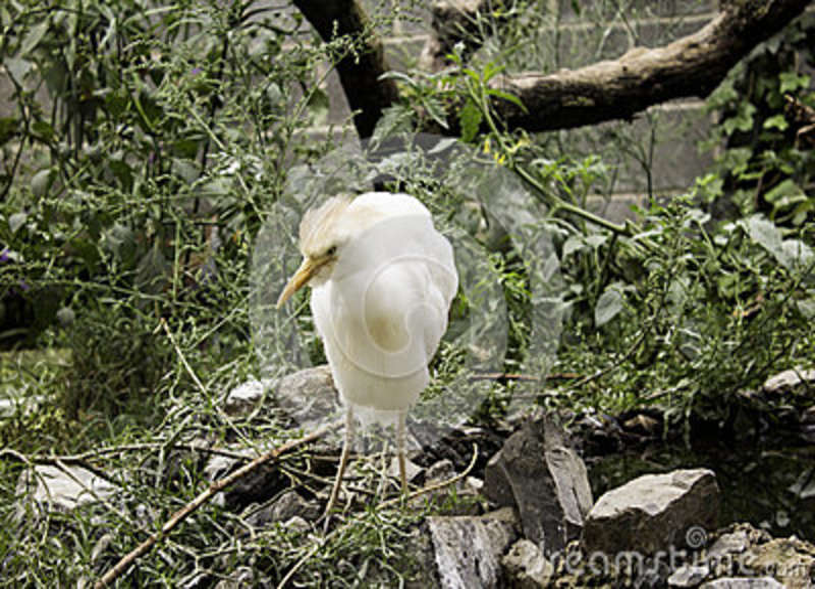 Exposição da falcoaria de Eagle