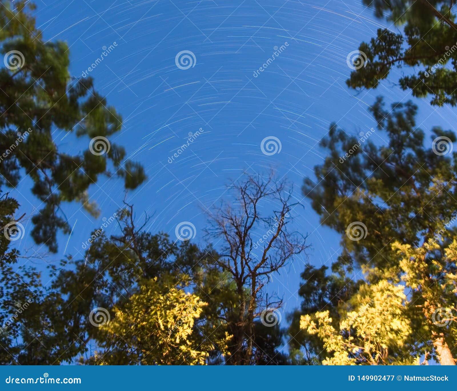 Exposição longa de fugas da estrela na noite em um esclarecimento na floresta no regulador Knowles State Forest em Wisconsin