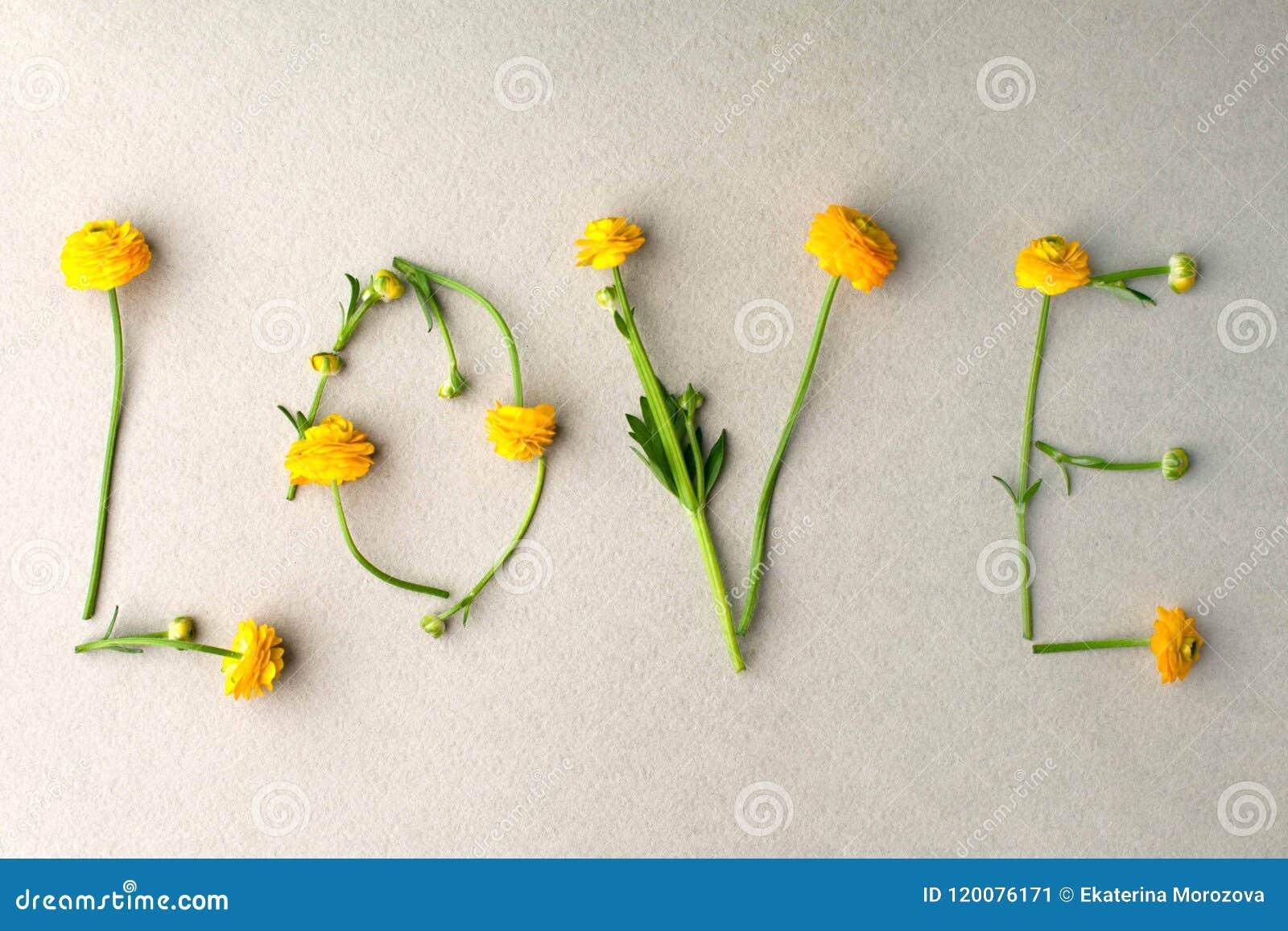 Exprima o AMOR feito de flores amarelas no fundo pastel verde Conceito mínimo do amor Dia de mães e de ` s do Valentim configuraç