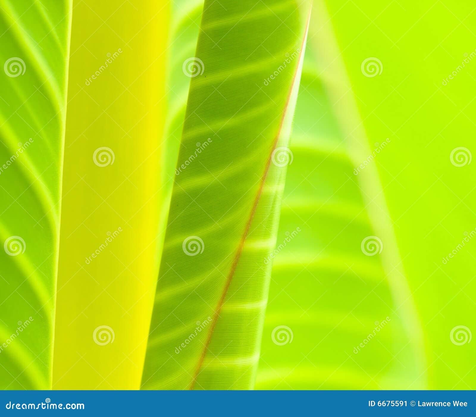Extracto de las hojas