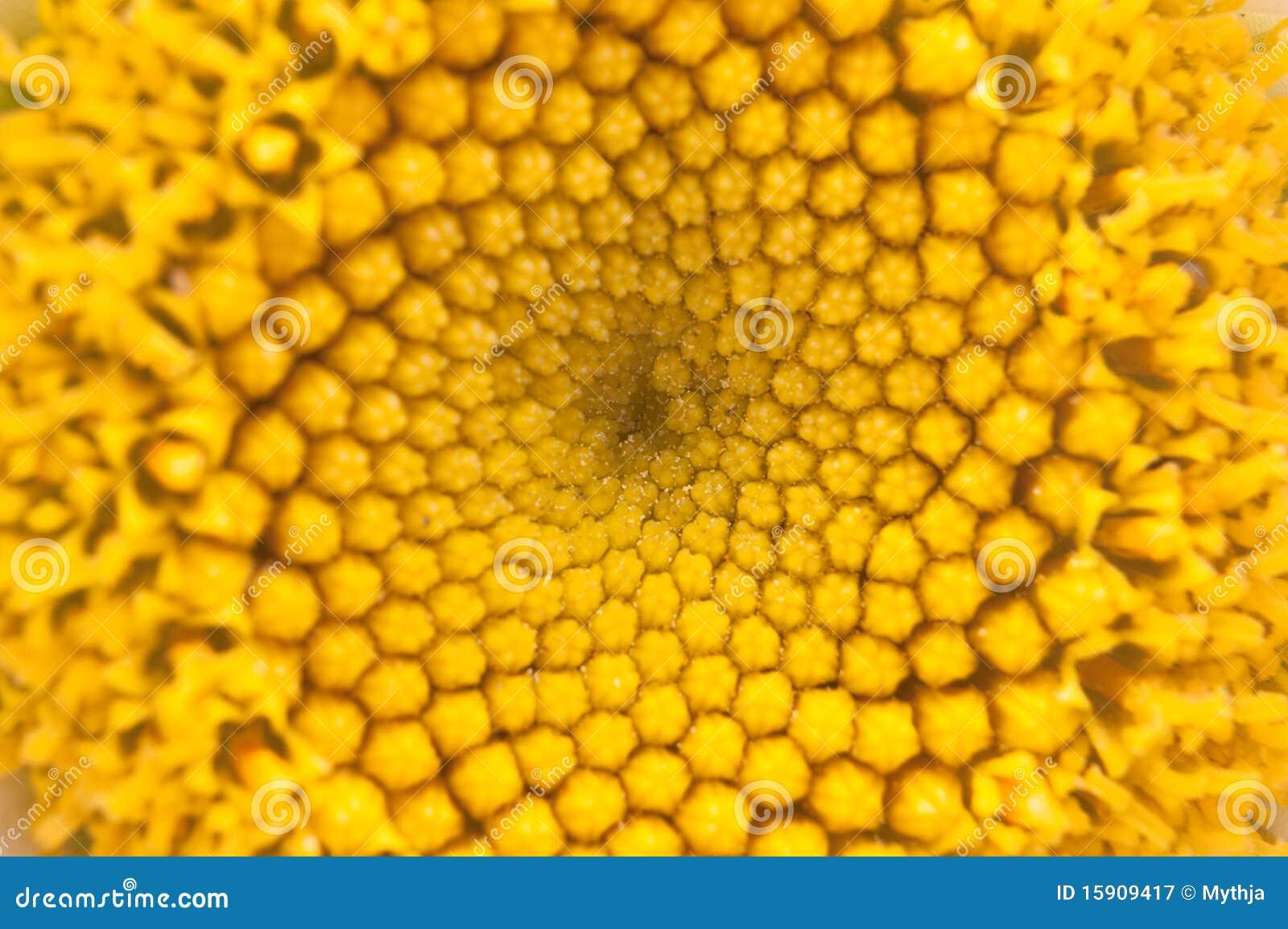 Extracto del polen