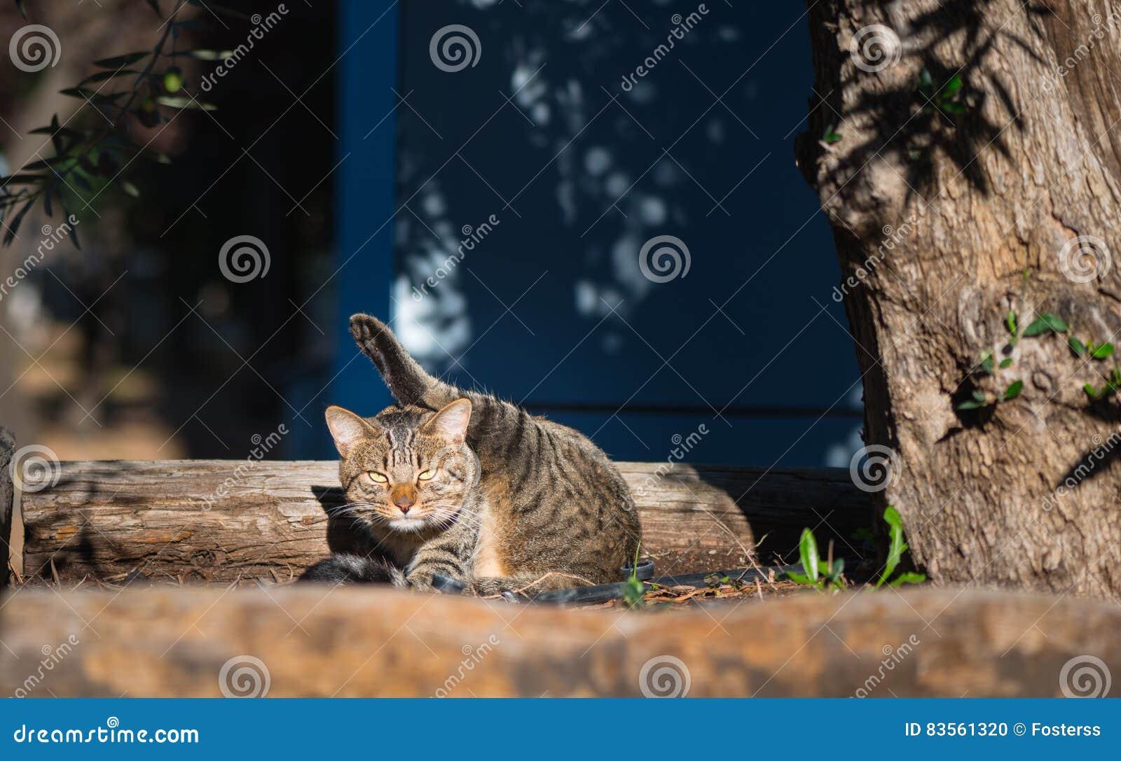 The extraordinary ninja cat